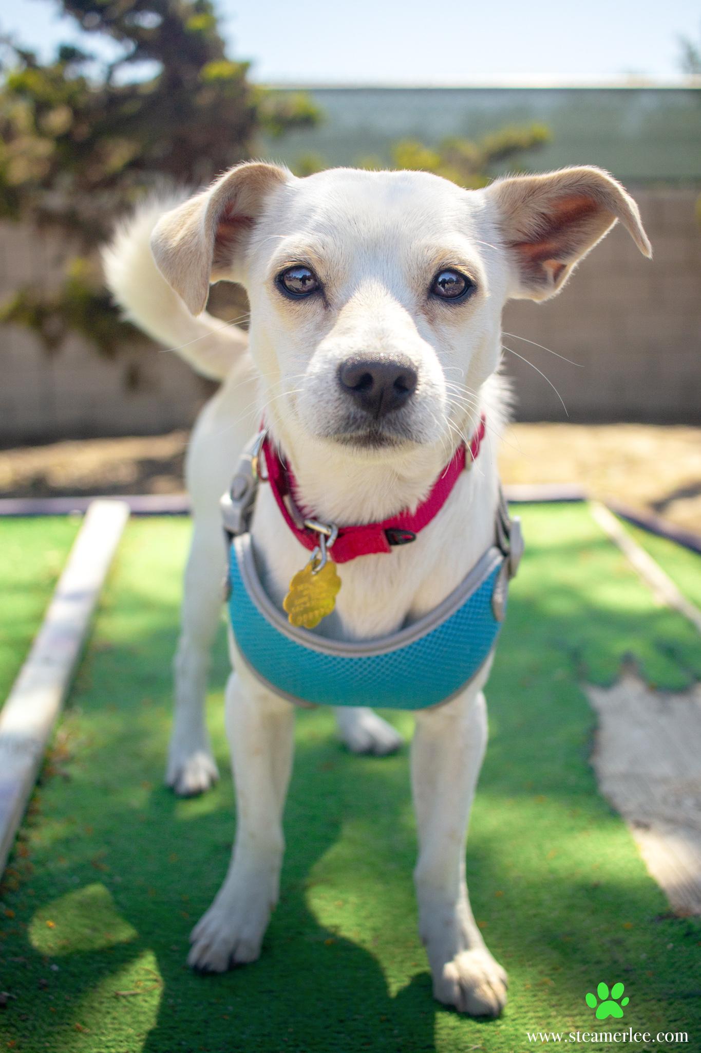 288-Orange-County-Dog-Photography-Steamer-Lee-Southern-California-SBACC.JPG