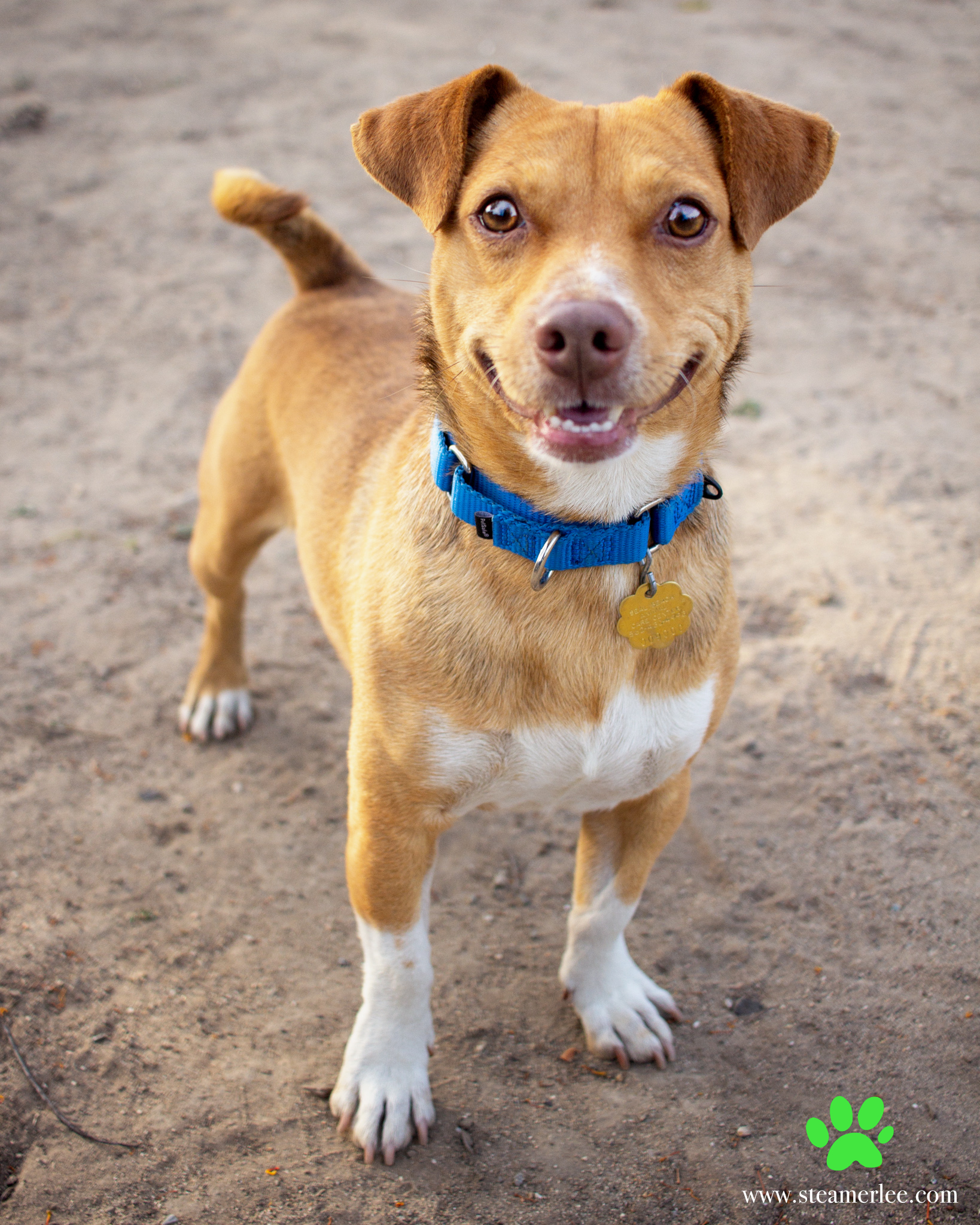 310-Orange-County-Dog-Photography-Steamer-Lee-Southern-California-SBACC.JPG