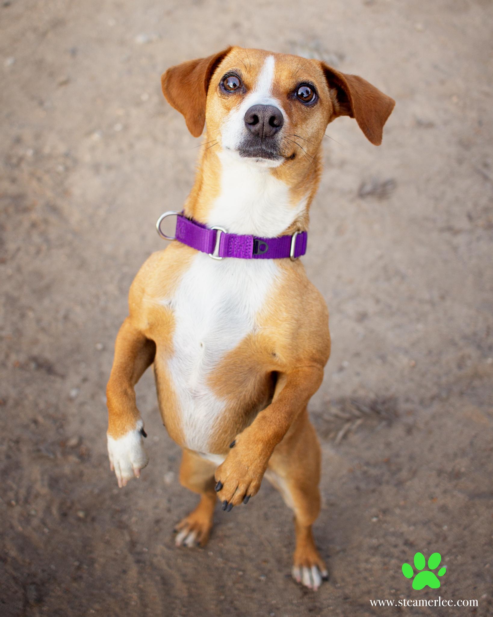 313-Orange-County-Dog-Photography-Steamer-Lee-Southern-California-SBACC.JPG