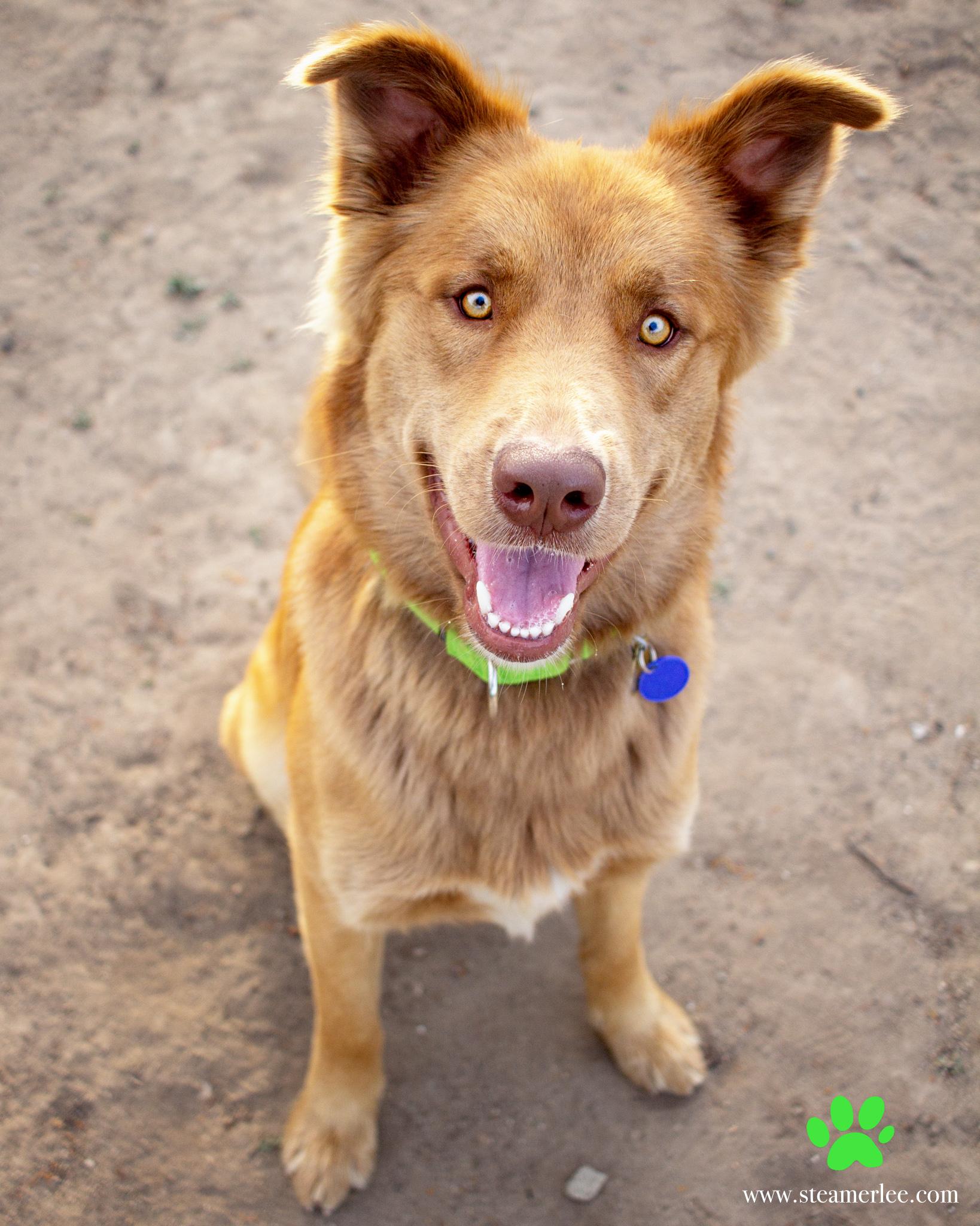 316-Orange-County-Dog-Photography-Steamer-Lee-Southern-California-SBACC.JPG