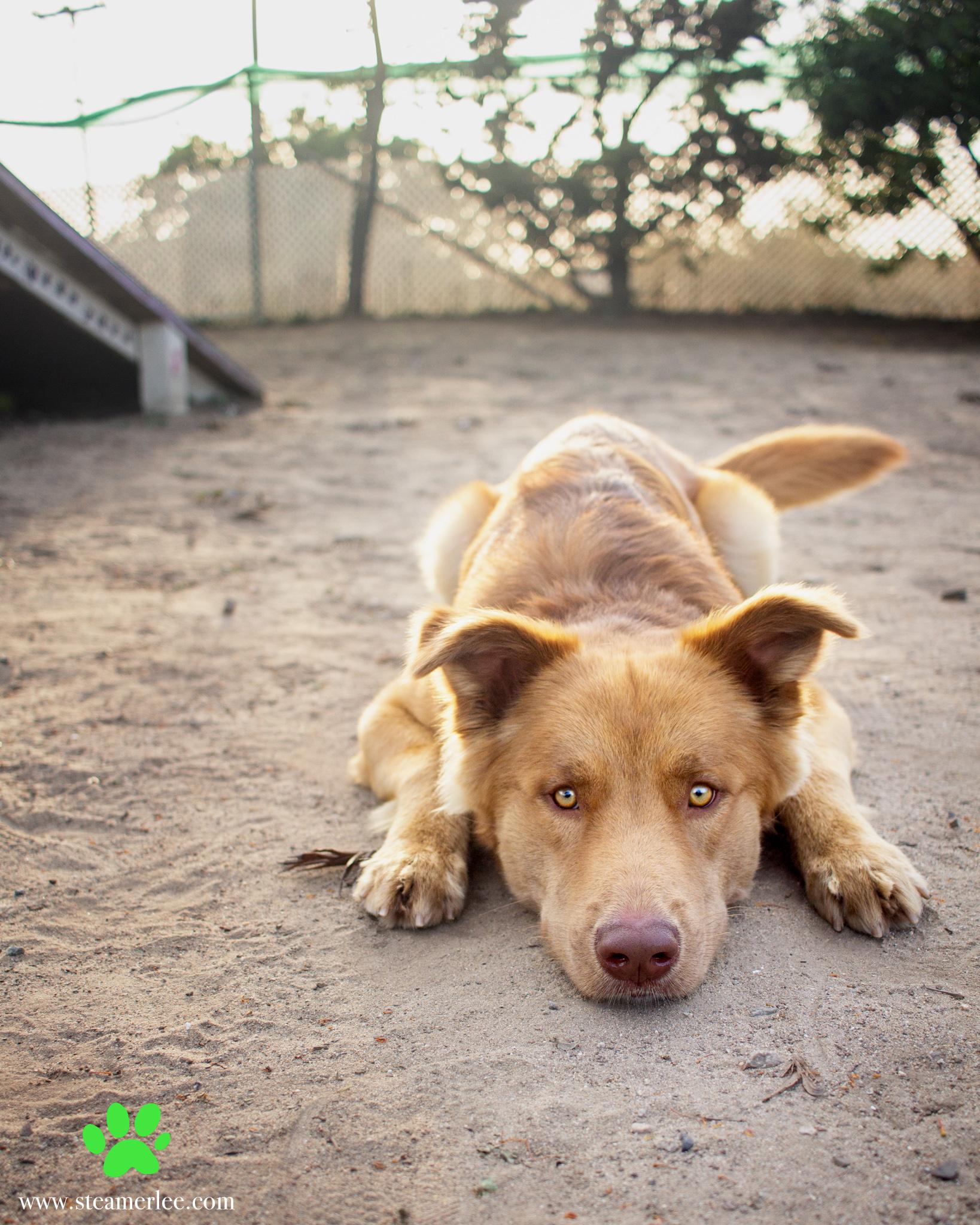 317-Orange-County-Dog-Photography-Steamer-Lee-Southern-California-SBACC.JPG