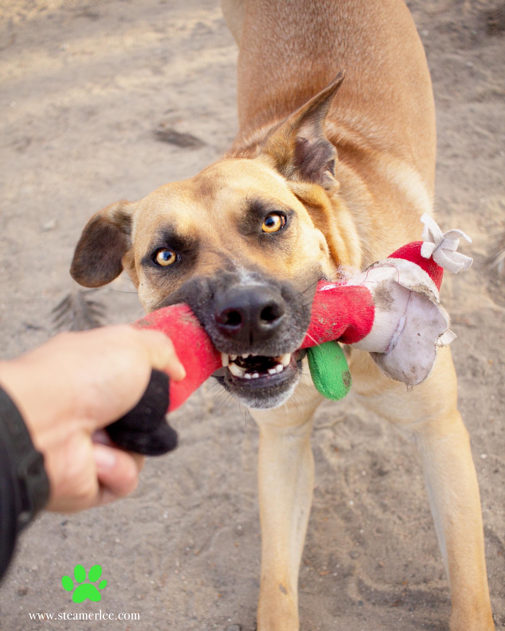 320-Orange-County-Dog-Photography-Steamer-Lee-Southern-California-SBACC.JPG