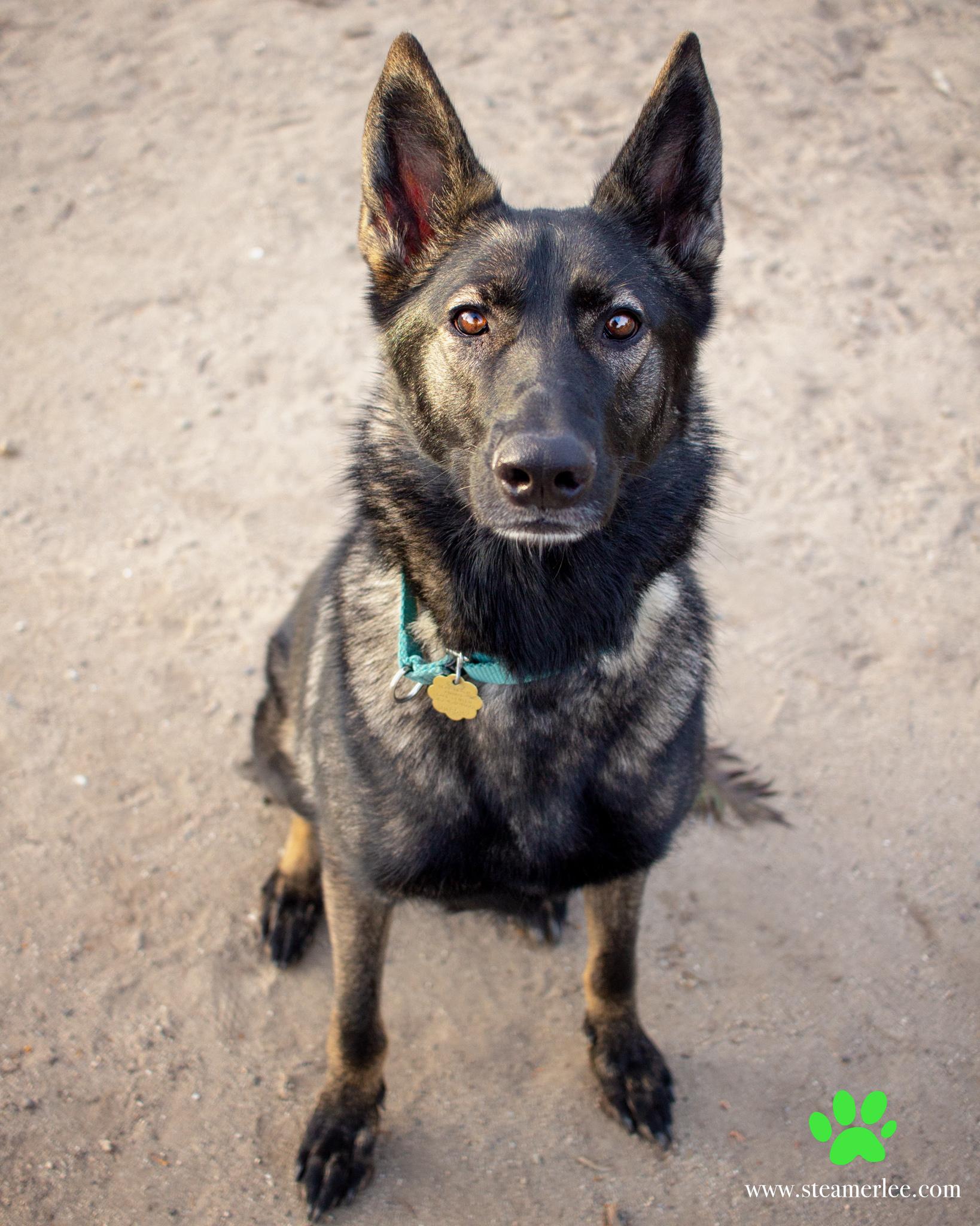 324-Orange-County-Dog-Photography-Steamer-Lee-Southern-California-SBACC.JPG