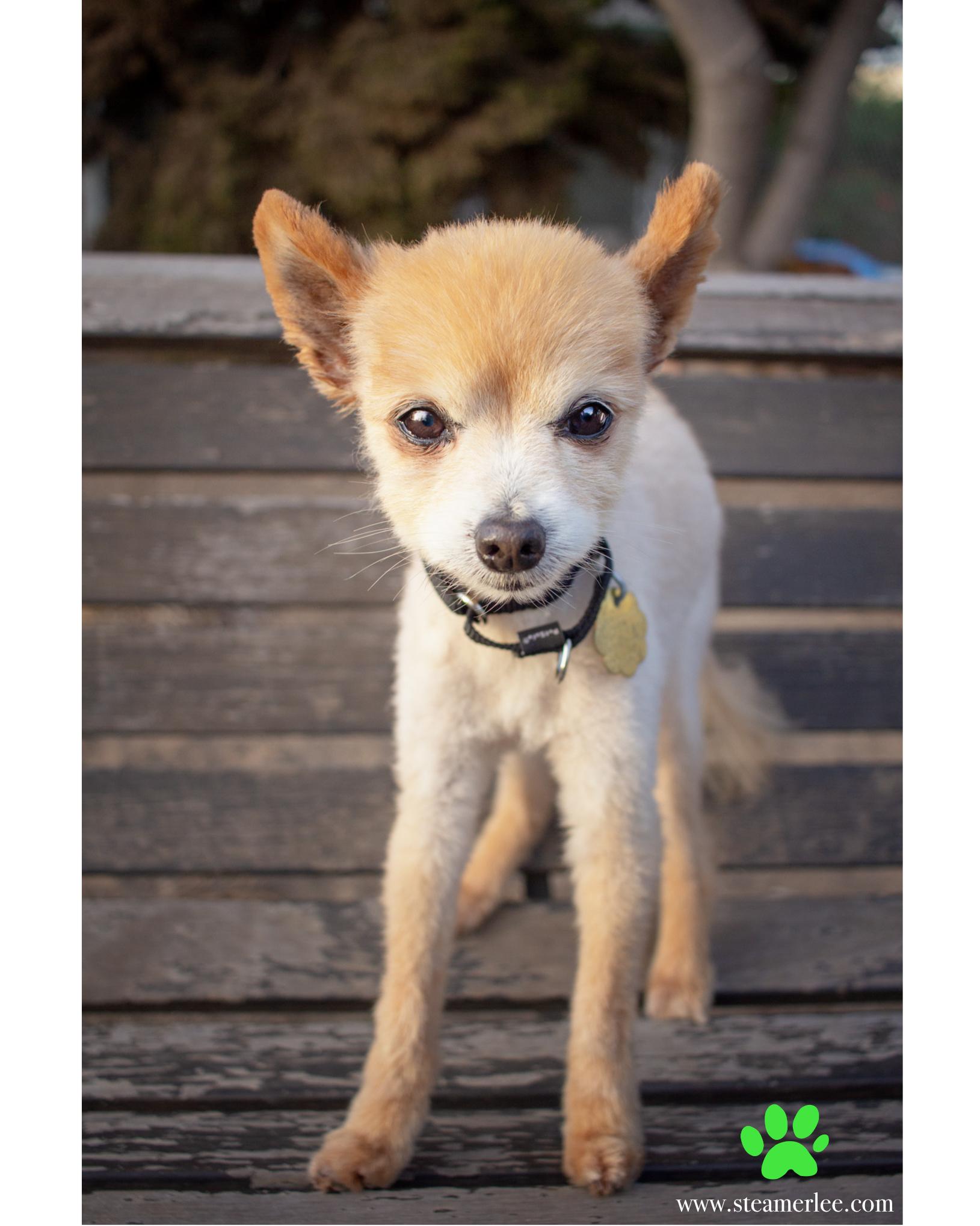 327-Orange-County-Dog-Photography-Steamer-Lee-Southern-California-SBACC.JPG
