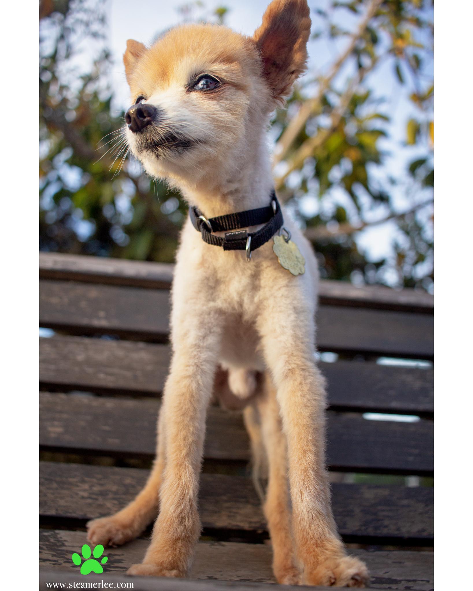 329-Orange-County-Dog-Photography-Steamer-Lee-Southern-California-SBACC.JPG