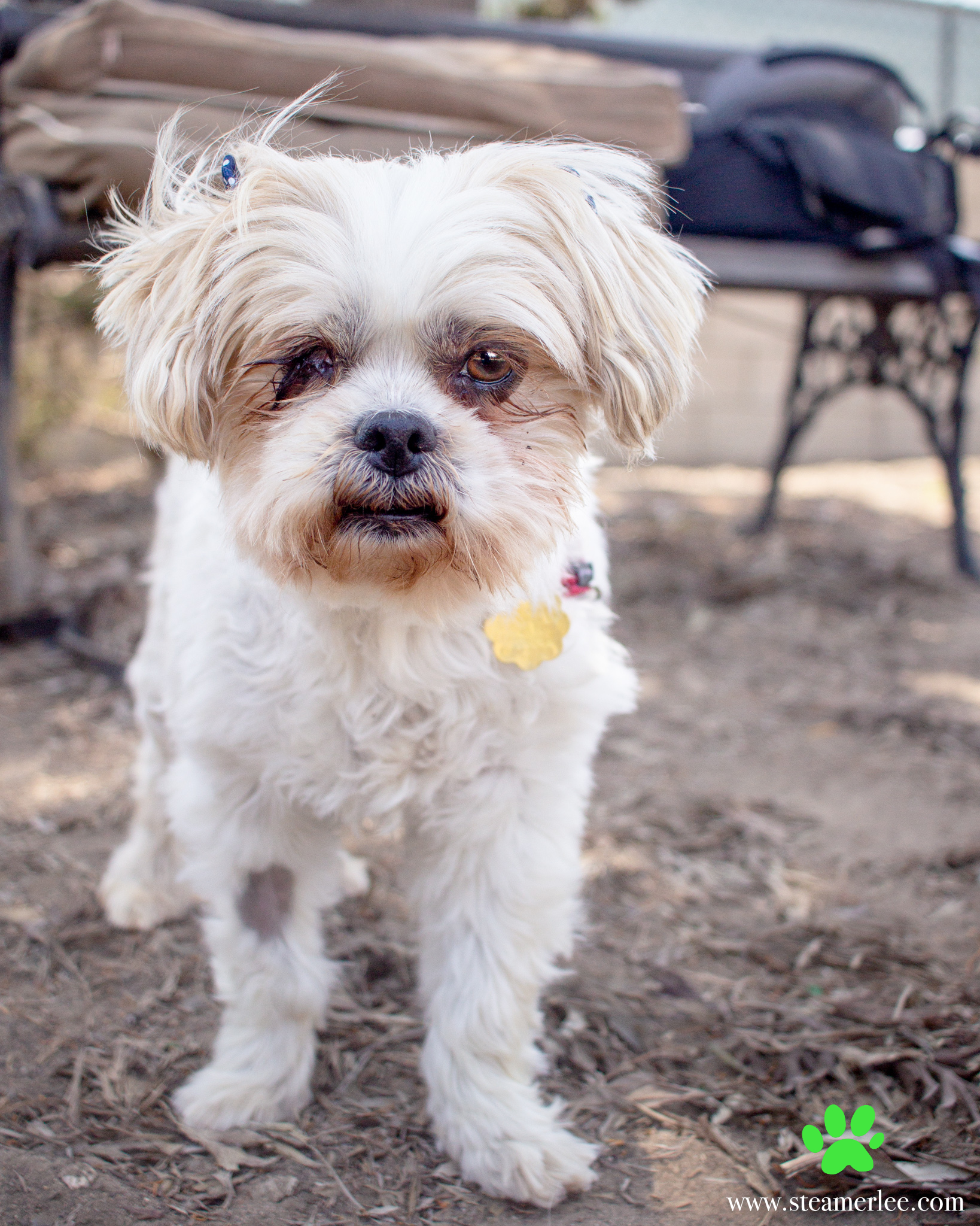 338-Orange-County-Dog-Photography-Steamer-Lee-Southern-California-SBACC.JPG