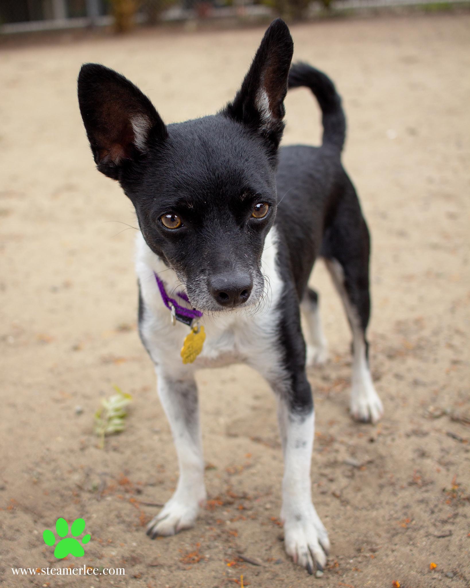 355-Orange-County-Dog-Photography-Steamer-Lee-Southern-California-SBACC.JPG