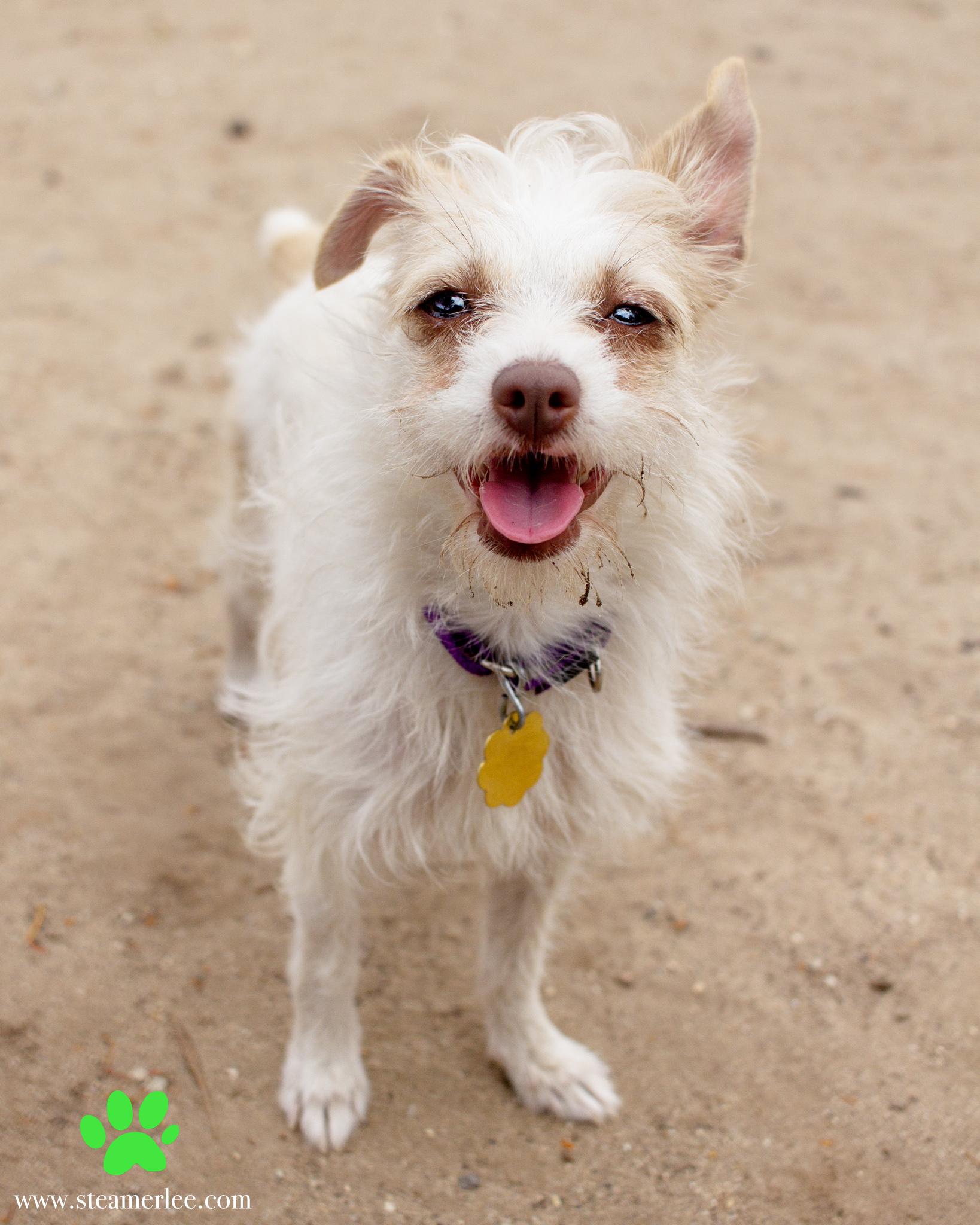 356-Orange-County-Dog-Photography-Steamer-Lee-Southern-California-SBACC.JPG