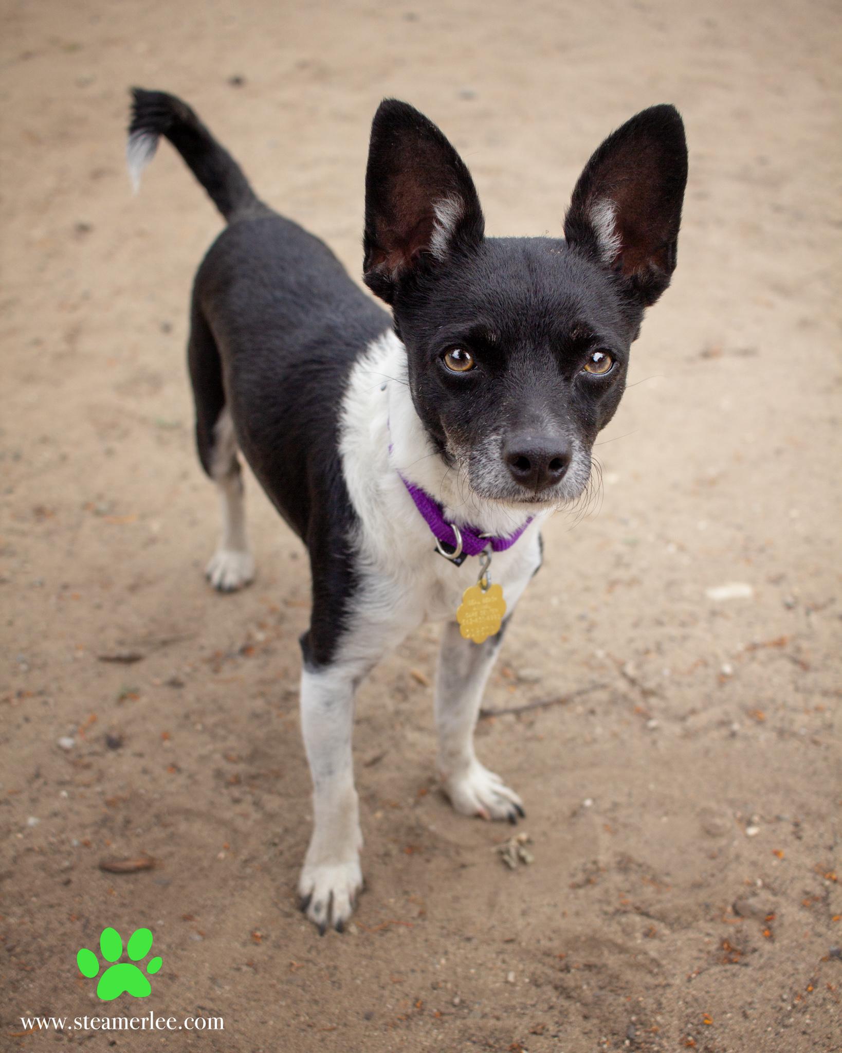 357-Orange-County-Dog-Photography-Steamer-Lee-Southern-California-SBACC.JPG