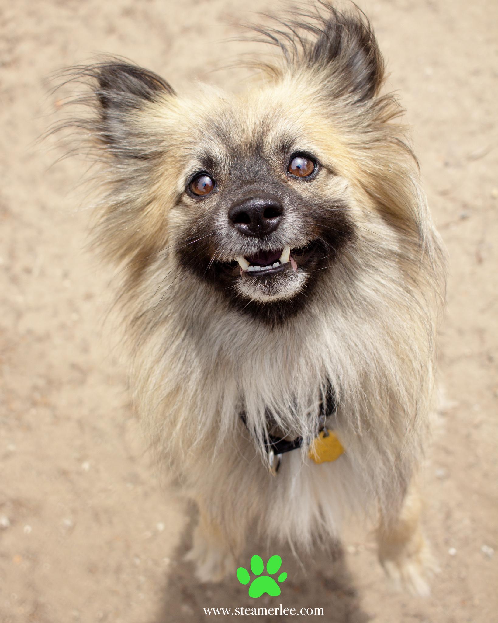 367-Orange-County-Dog-Photography-Steamer-Lee-Southern-California-SBACC.JPG