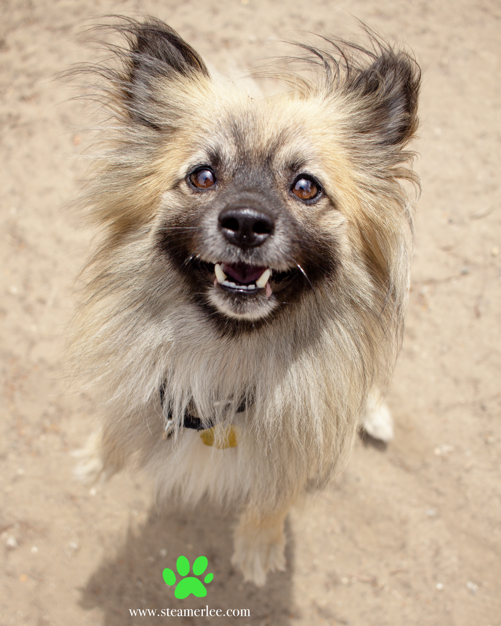 368-Orange-County-Dog-Photography-Steamer-Lee-Southern-California-SBACC.JPG