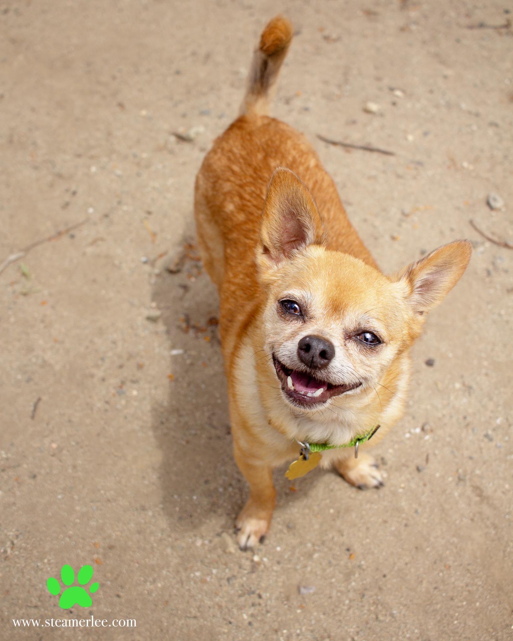 372-Orange-County-Dog-Photography-Steamer-Lee-Southern-California-SBACC.JPG
