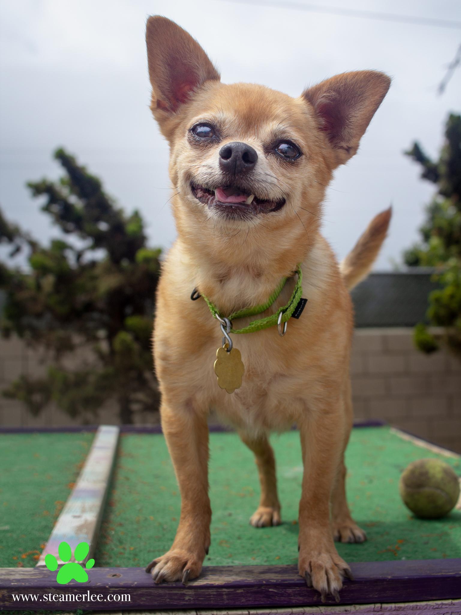 374-Orange-County-Dog-Photography-Steamer-Lee-Southern-California-SBACC.JPG
