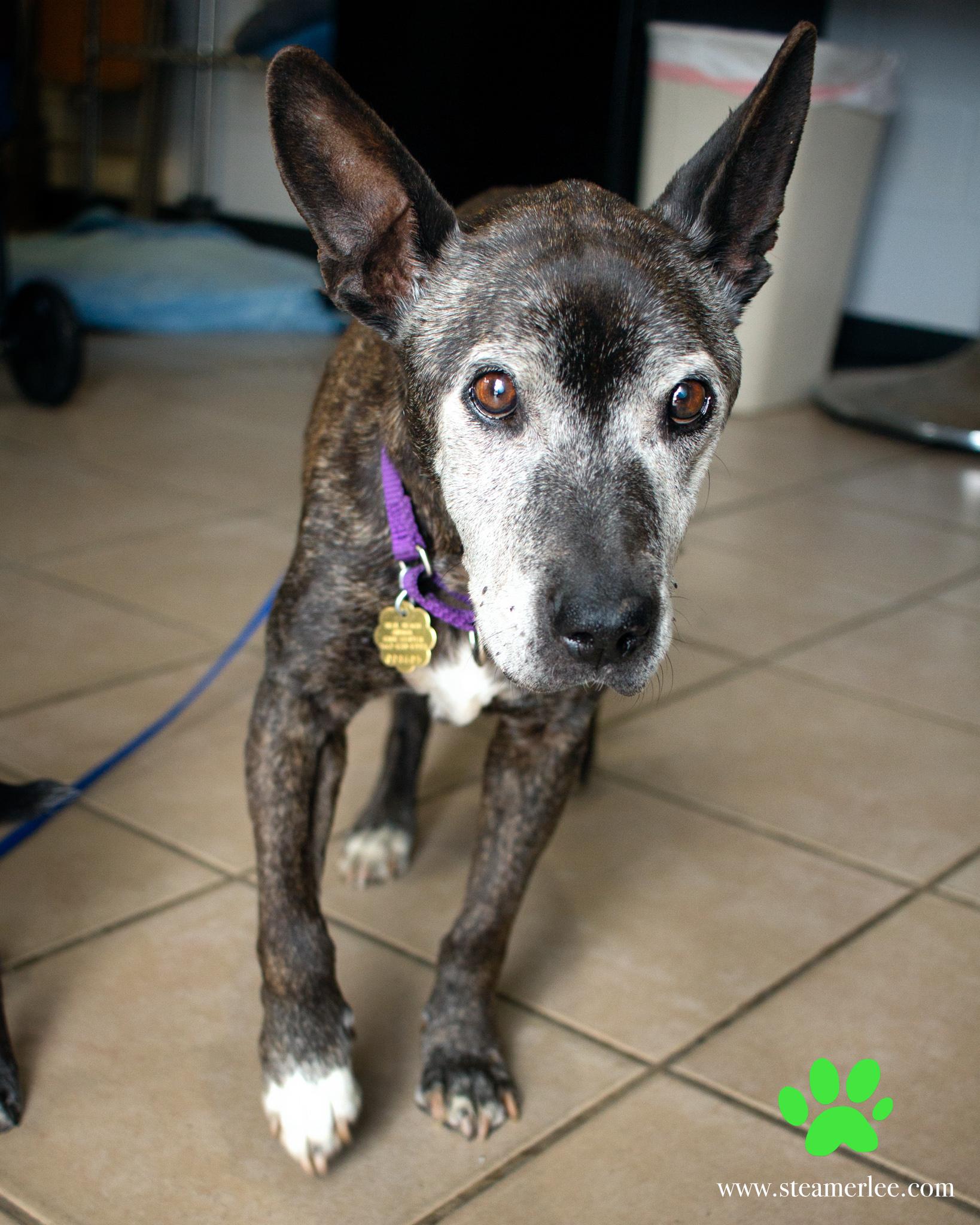 382-Orange-County-Dog-Photography-Steamer-Lee-Southern-California-SBACC.JPG
