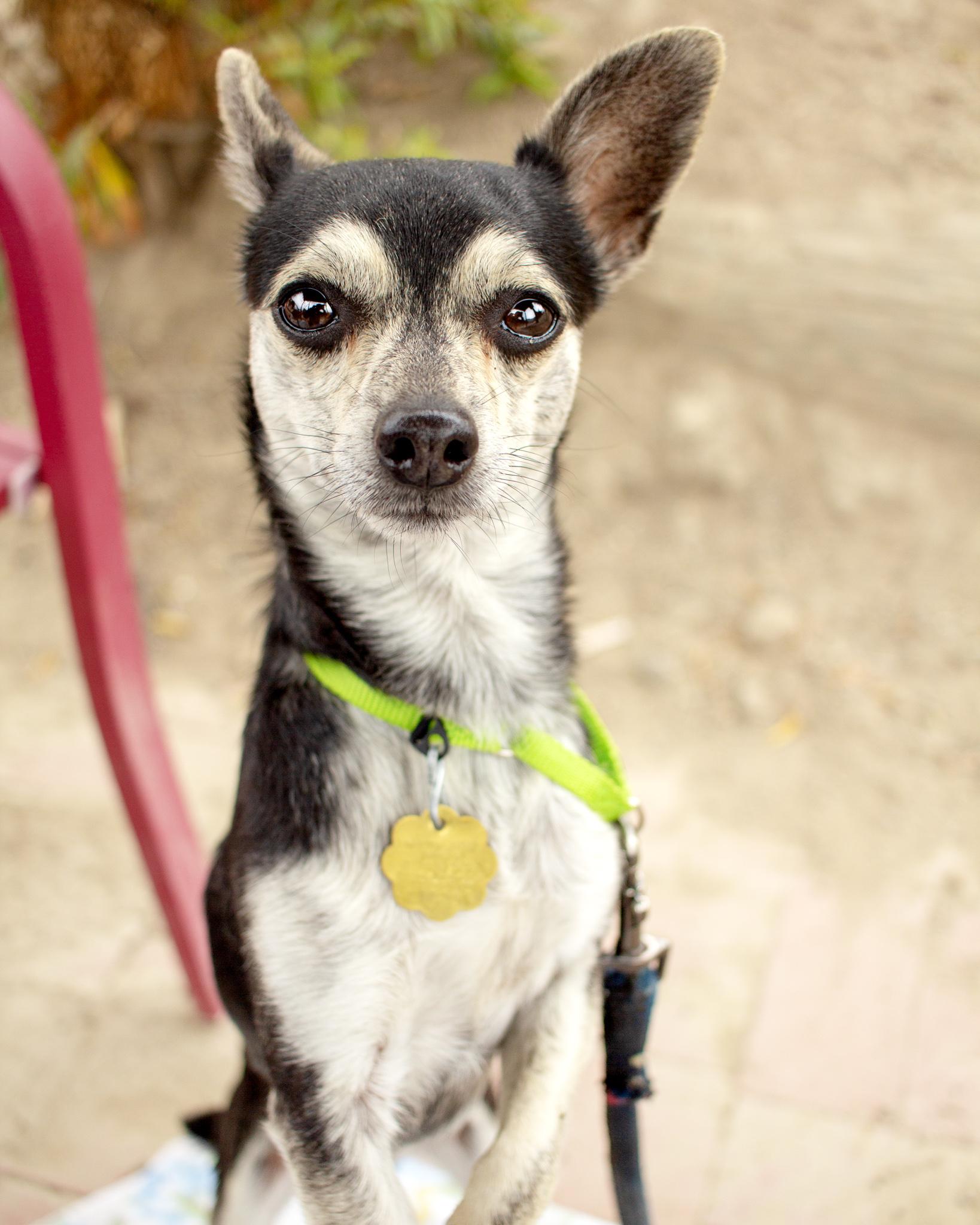 387-Orange-County-Dog-Photography-Steamer-Lee-Southern-California-SBACC.JPG