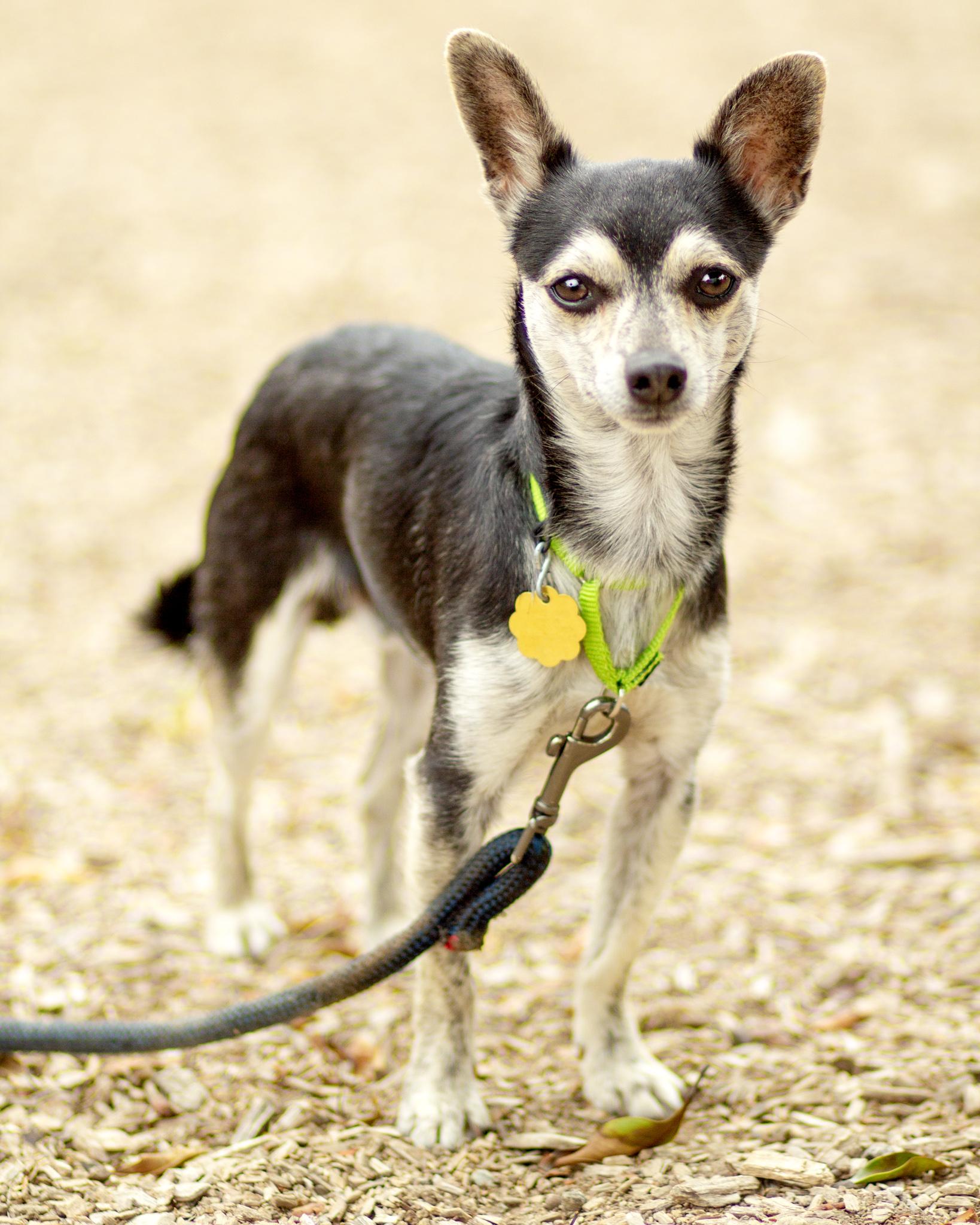 388-Orange-County-Dog-Photography-Steamer-Lee-Southern-California-SBACC.JPG