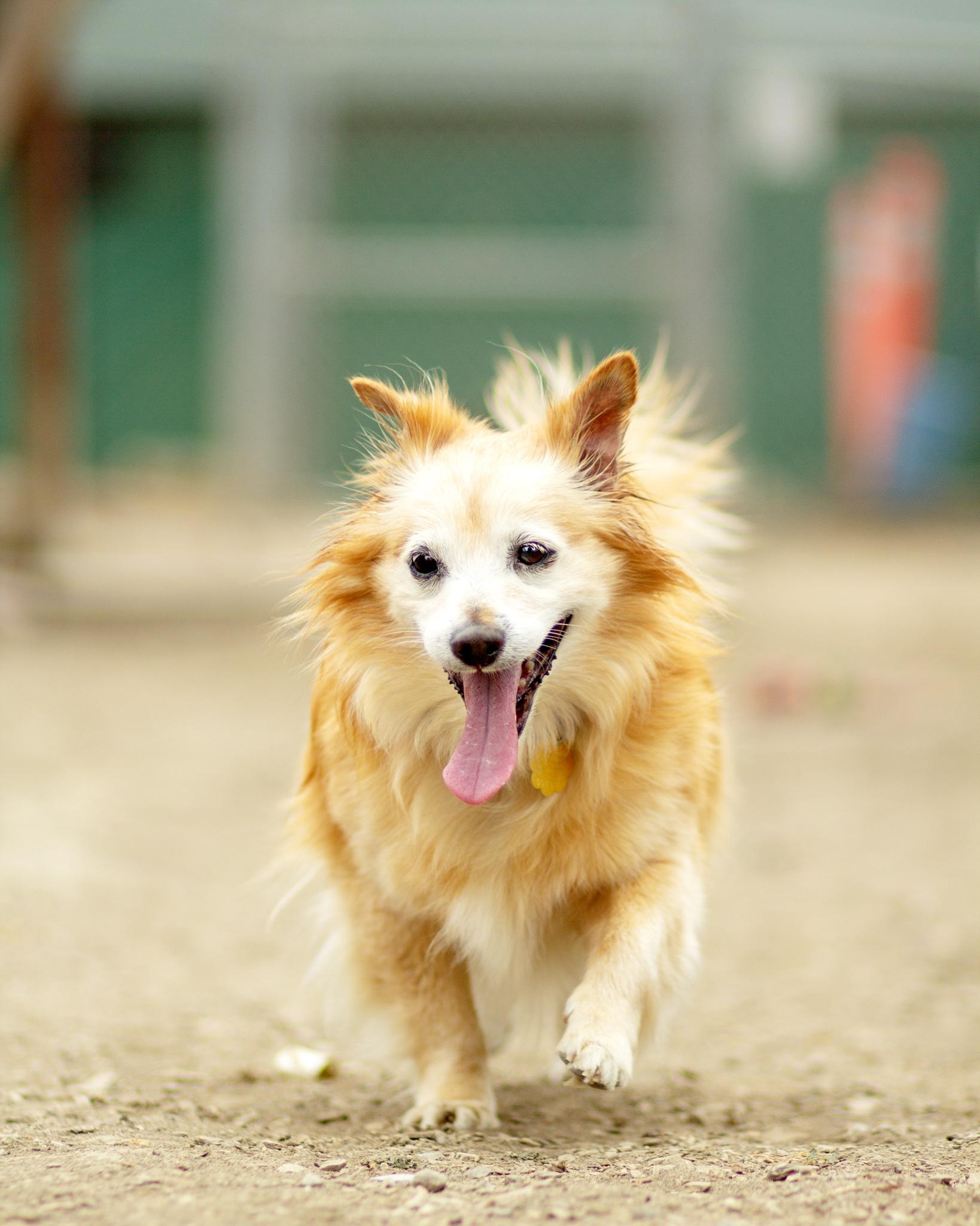 389-Orange-County-Dog-Photography-Steamer-Lee-Southern-California-SBACC.JPG