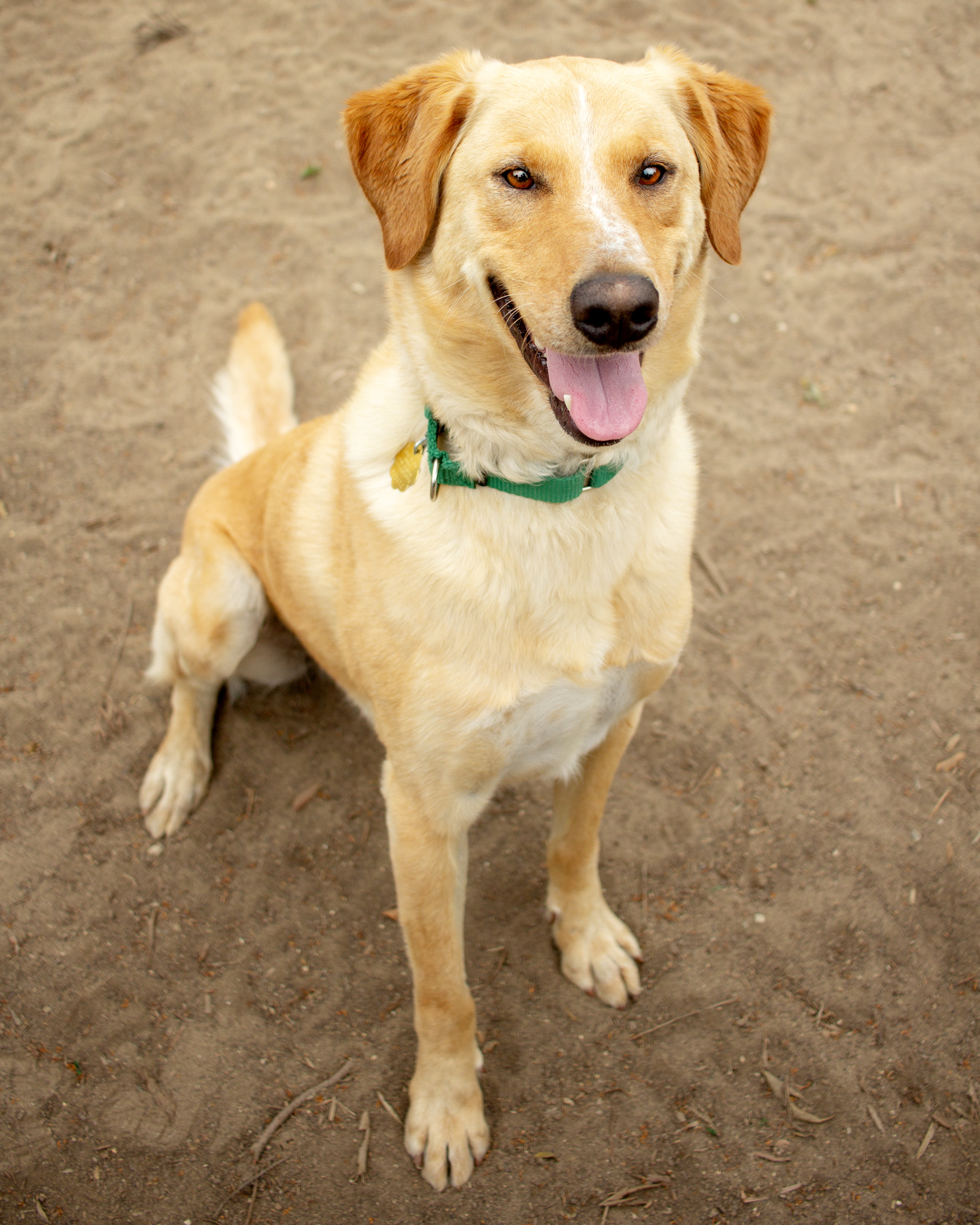 393-Orange-County-Dog-Photography-Steamer-Lee-Southern-California-SBACC.JPG