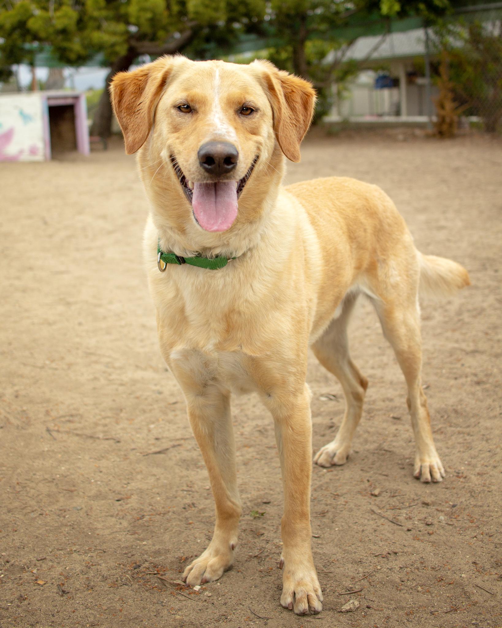 394-Orange-County-Dog-Photography-Steamer-Lee-Southern-California-SBACC.JPG