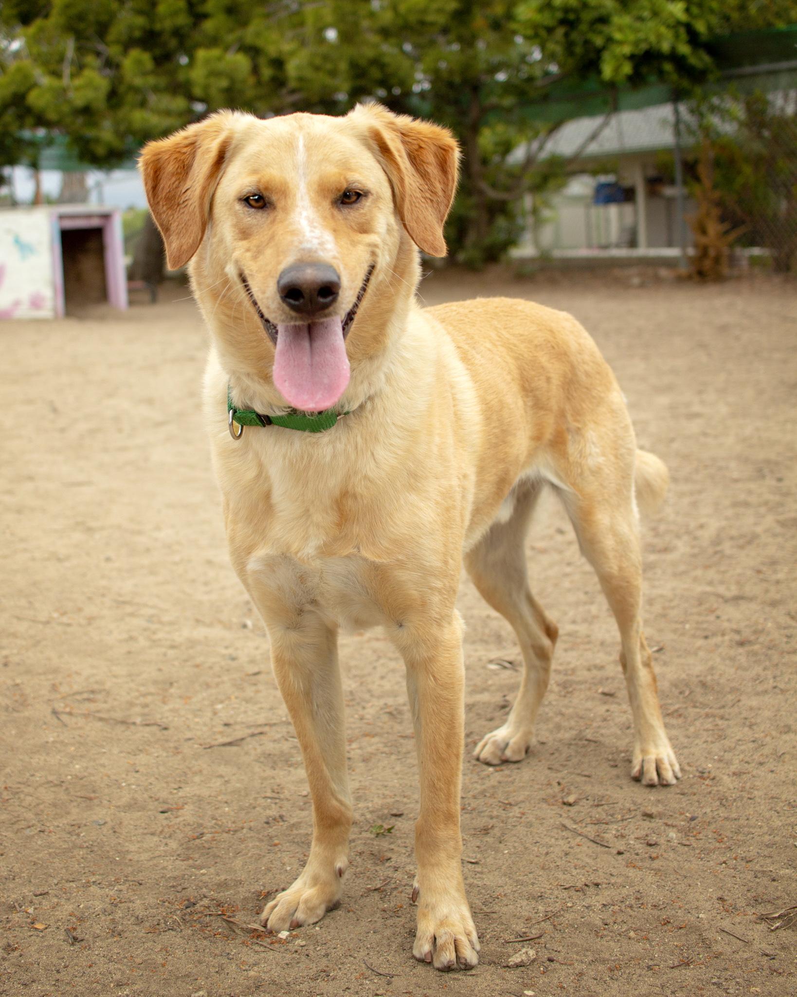 395-Orange-County-Dog-Photography-Steamer-Lee-Southern-California-SBACC.JPG