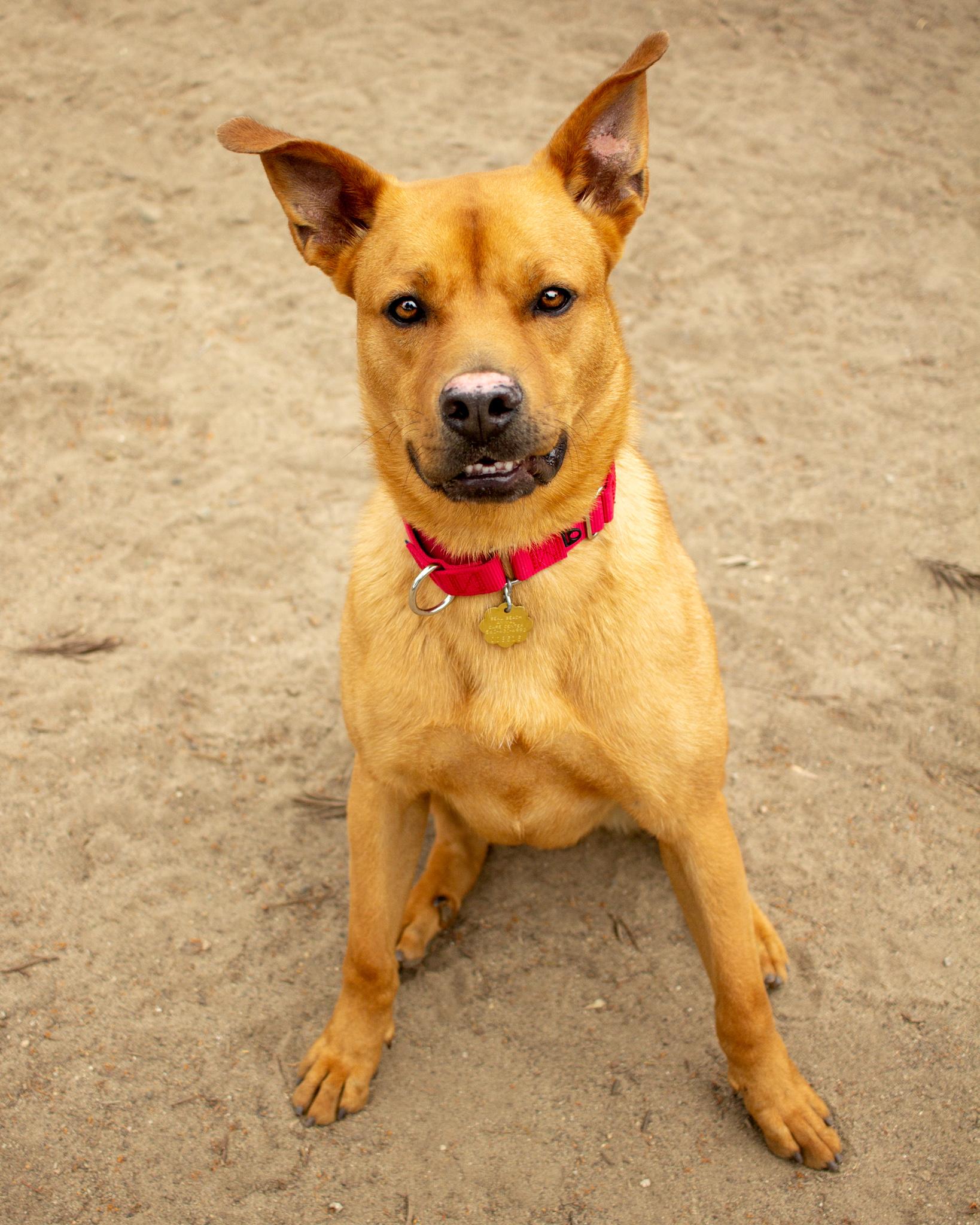 397-Orange-County-Dog-Photography-Steamer-Lee-Southern-California-SBACC.JPG