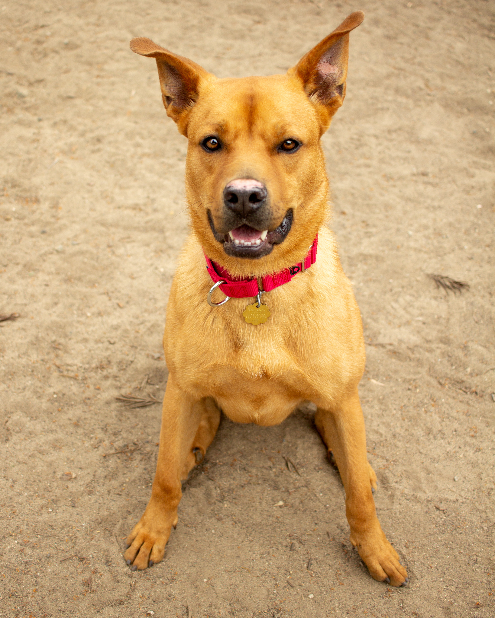 398-Orange-County-Dog-Photography-Steamer-Lee-Southern-California-SBACC.JPG