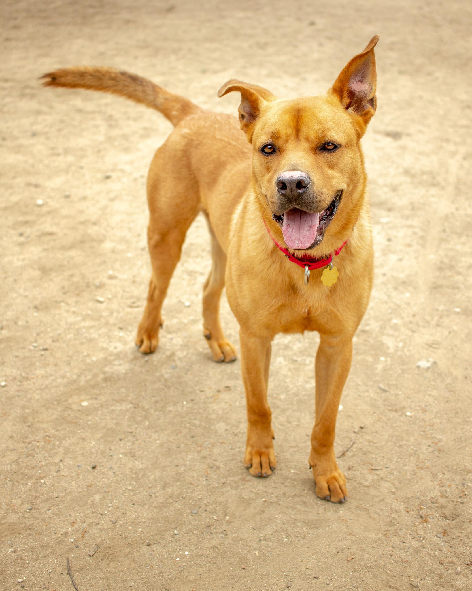 399-Orange-County-Dog-Photography-Steamer-Lee-Southern-California-SBACC.JPG