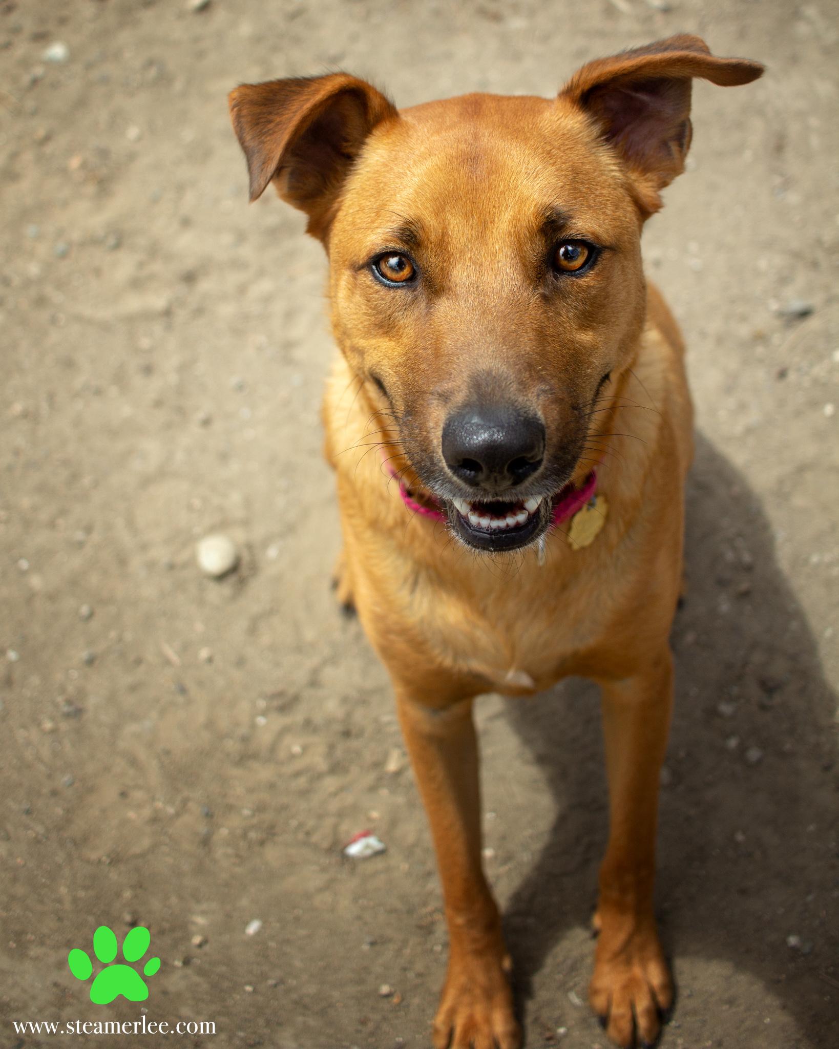 401-Orange-County-Dog-Photography-Steamer-Lee-Southern-California-SBACC.JPG