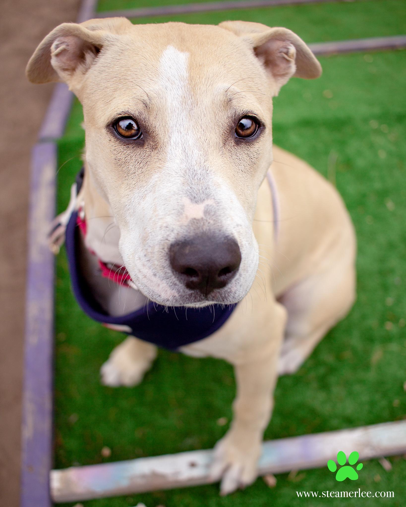 426-Orange-County-Dog-Photography-Steamer-Lee-Southern-California-SBACC.JPG