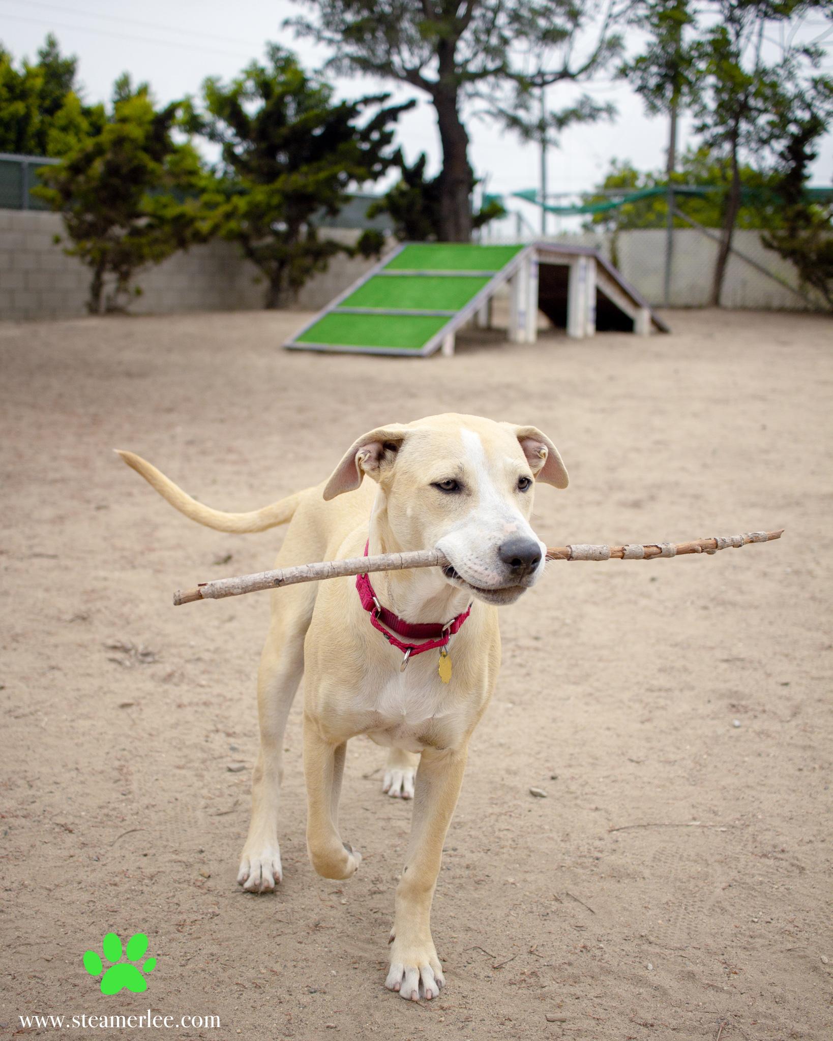 435-Orange-County-Dog-Photography-Steamer-Lee-Southern-California-SBACC.JPG