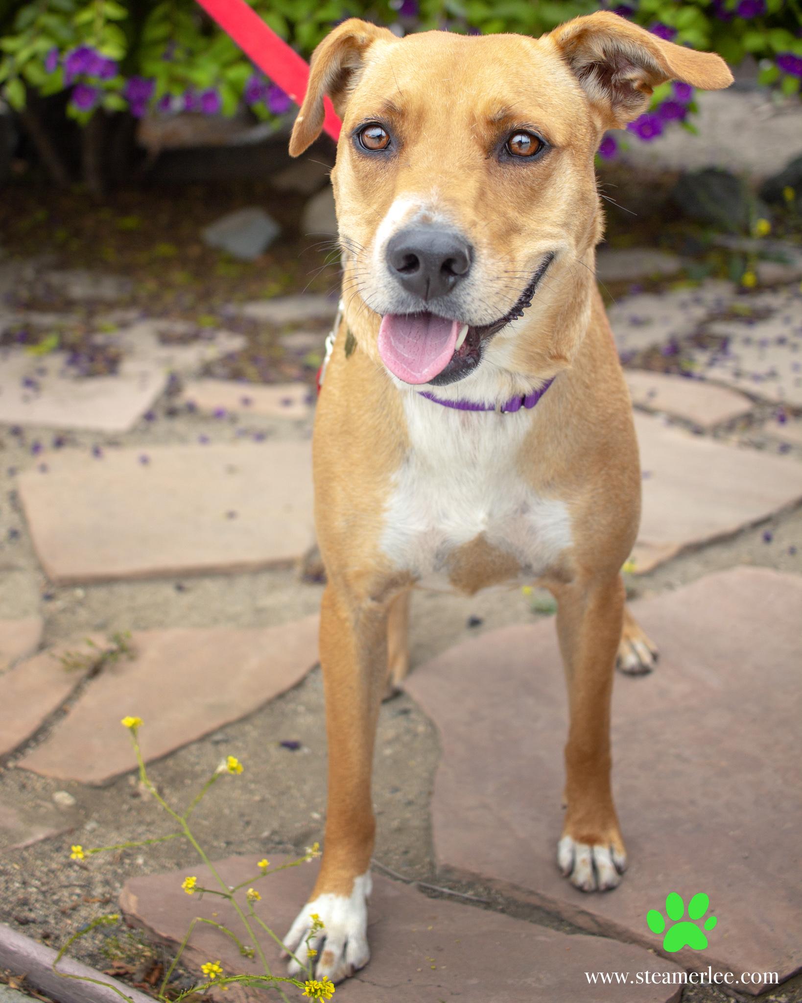 438-Orange-County-Dog-Photography-Steamer-Lee-Southern-California-SBACC.JPG