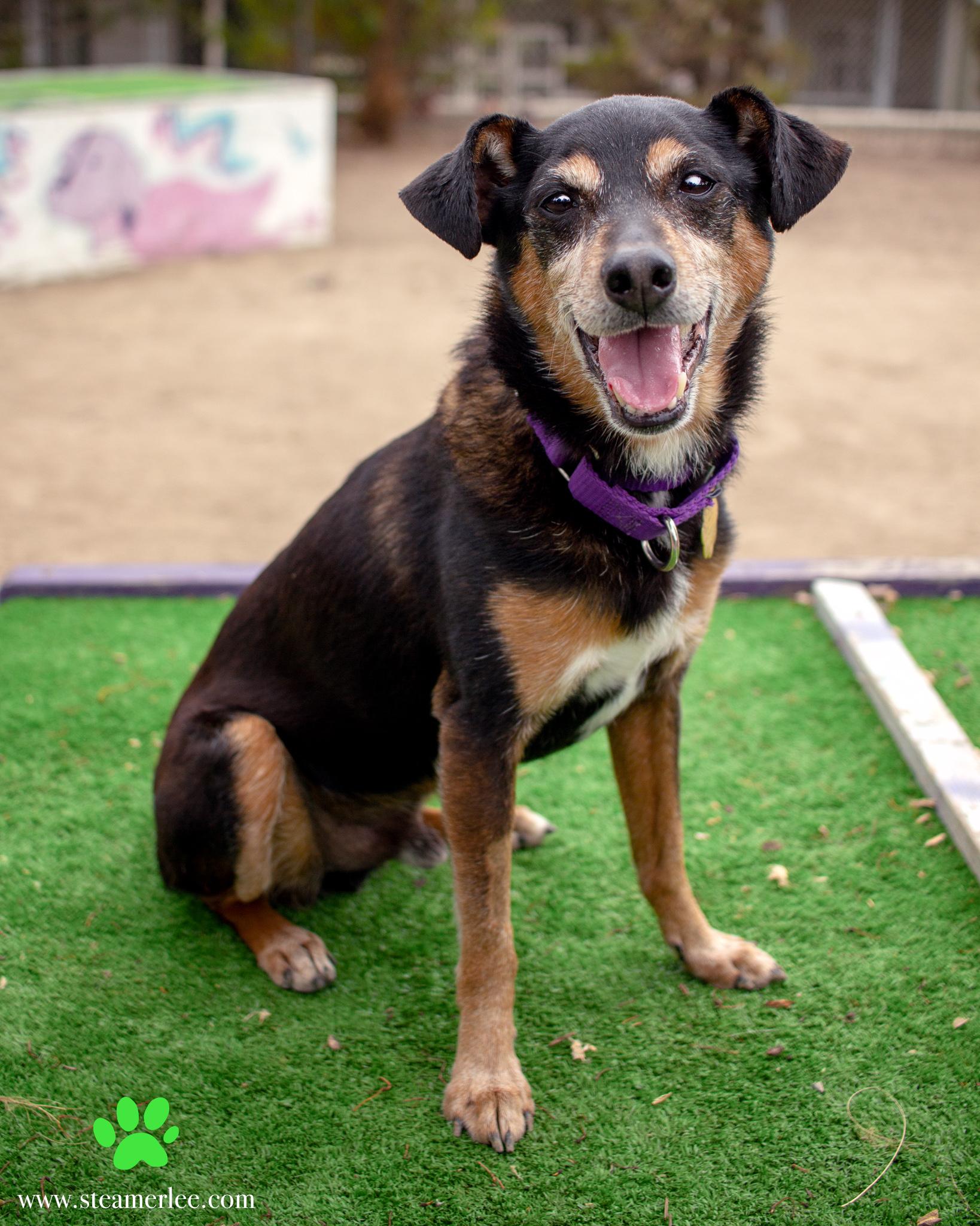 445-Orange-County-Dog-Photography-Steamer-Lee-Southern-California-SBACC.JPG