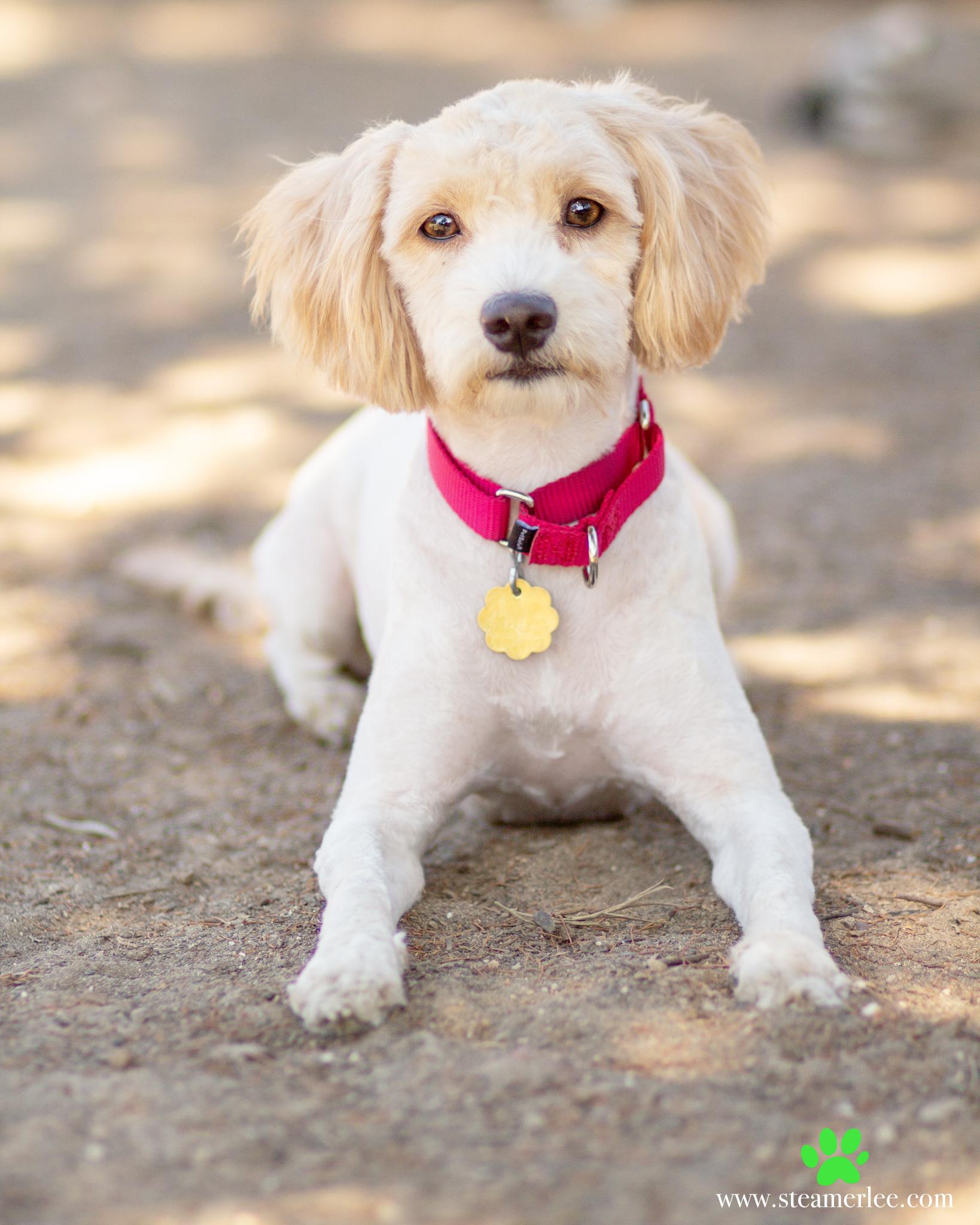 469-Orange-County-Dog-Photography-Steamer-Lee-Southern-California-SBACC.JPG