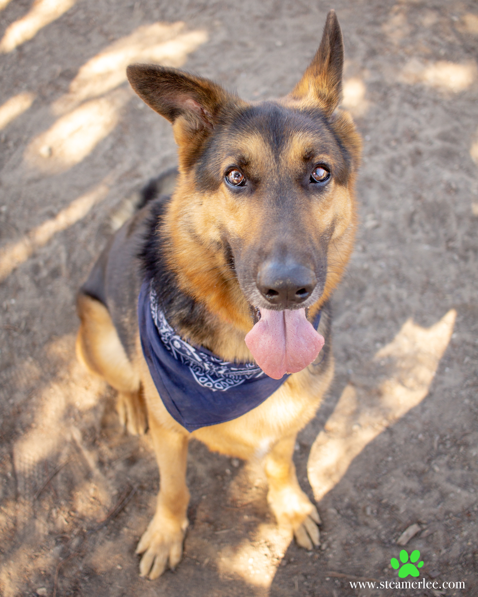 471-Orange-County-Dog-Photography-Steamer-Lee-Southern-California-SBACC.JPG