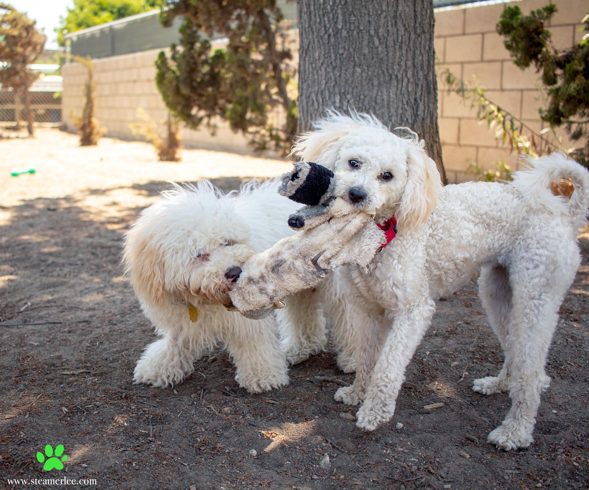 477-Orange-County-Dog-Photography-Steamer-Lee-Southern-California-SBACC.JPG