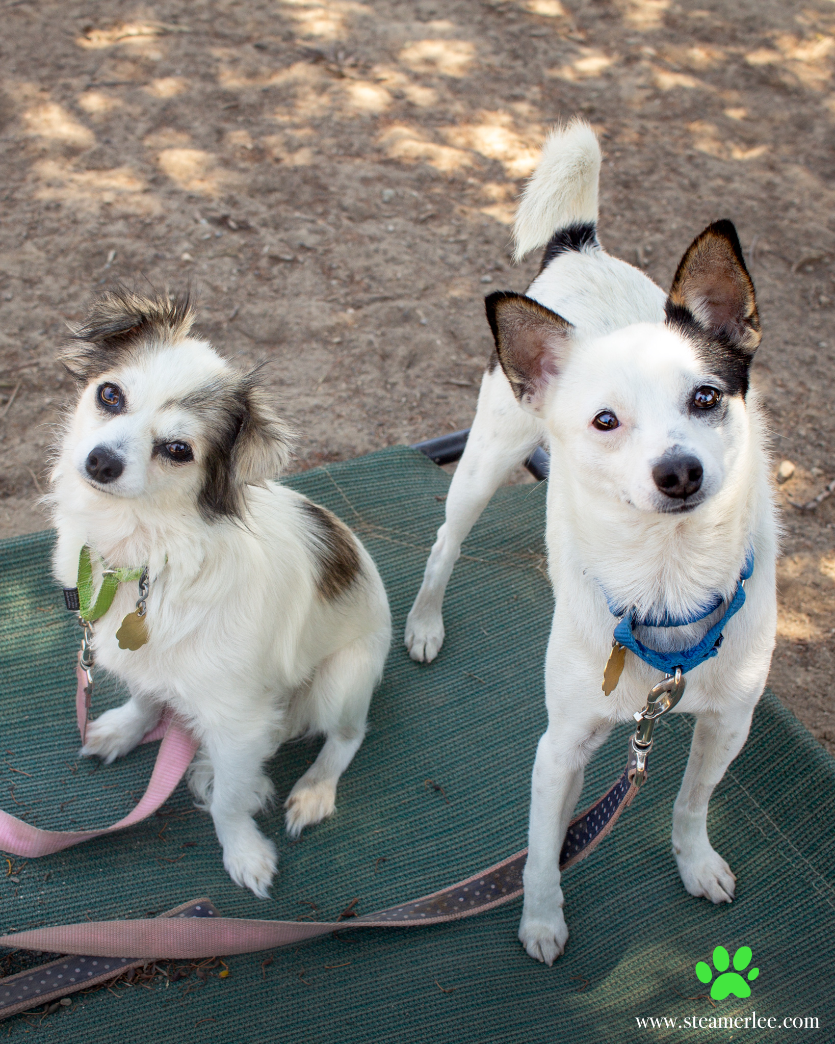 482-Orange-County-Dog-Photography-Steamer-Lee-Southern-California-SBACC.JPG