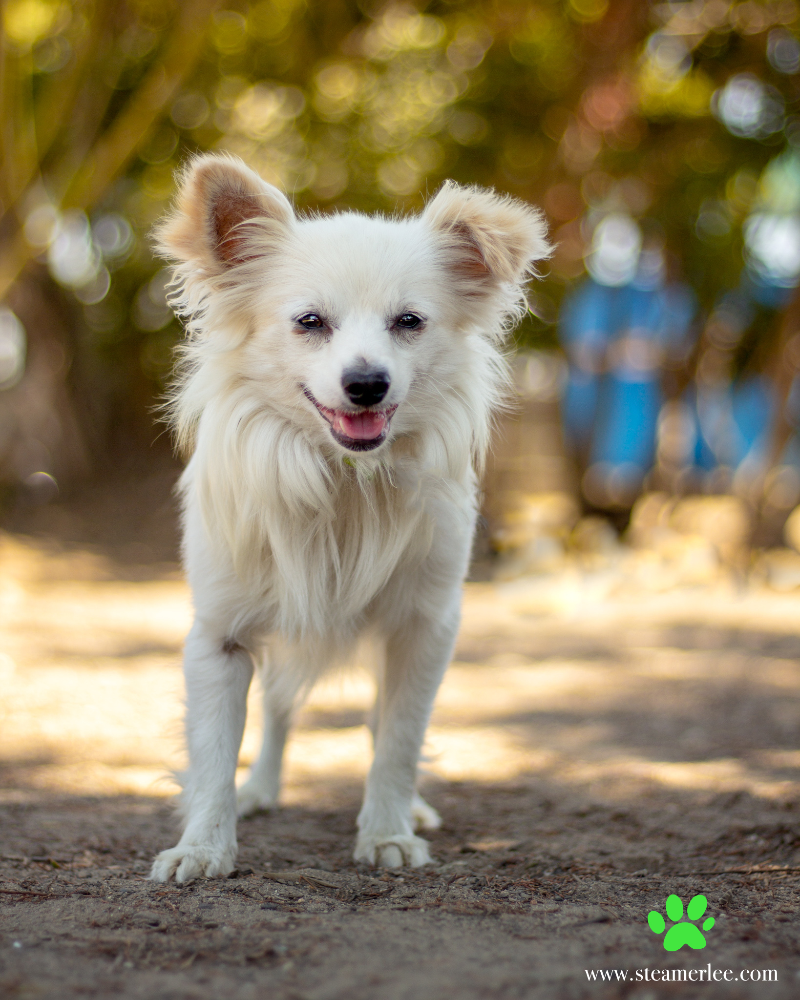 483-Orange-County-Dog-Photography-Steamer-Lee-Southern-California-SBACC.JPG