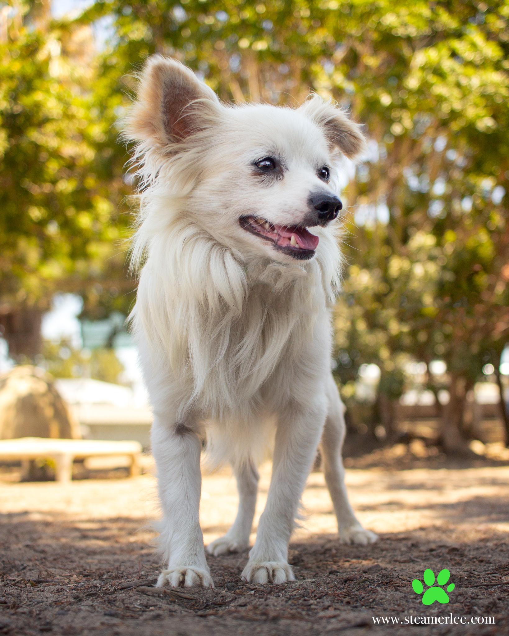 484-Orange-County-Dog-Photography-Steamer-Lee-Southern-California-SBACC.JPG