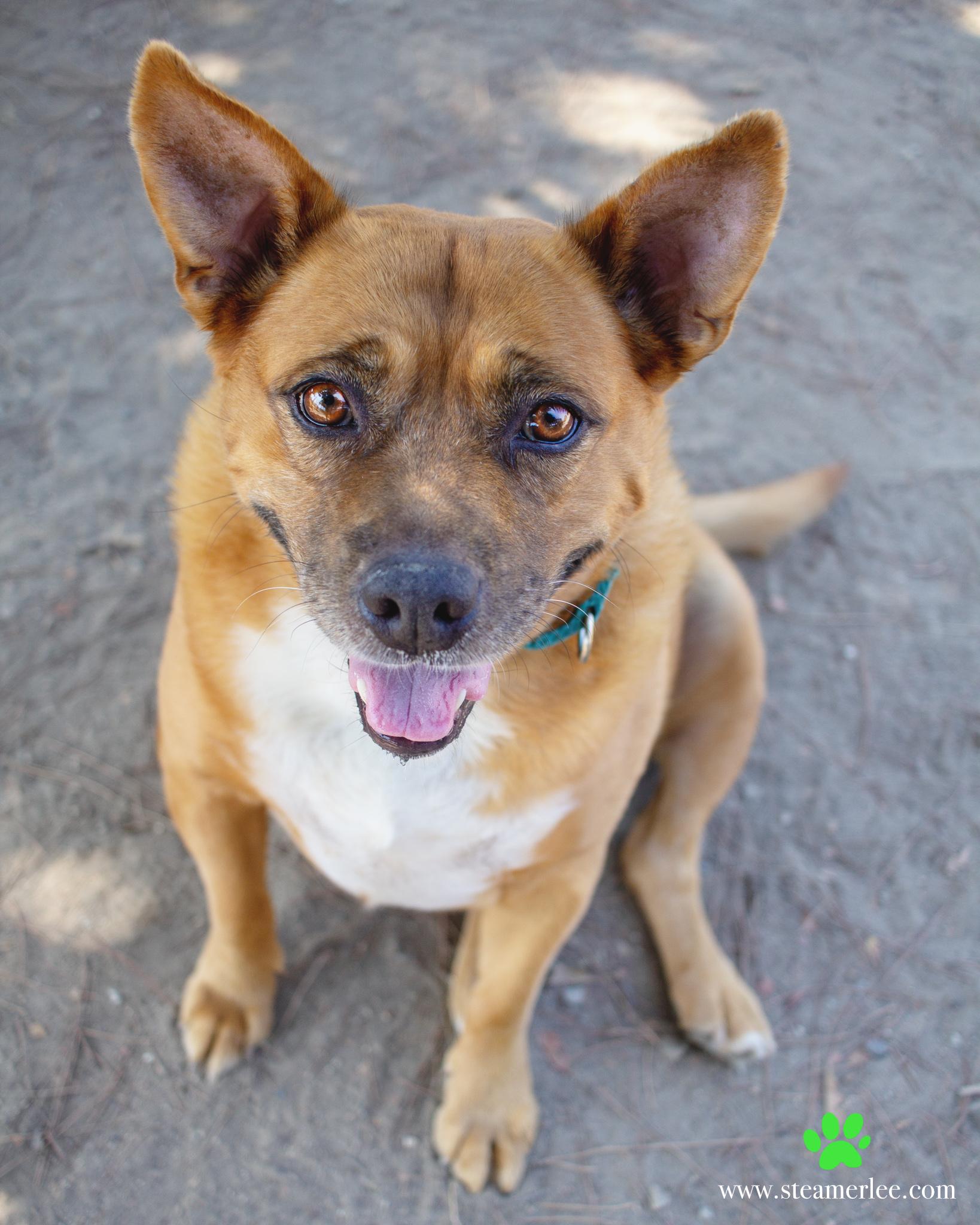 487-Orange-County-Dog-Photography-Steamer-Lee-Southern-California-SBACC.JPG