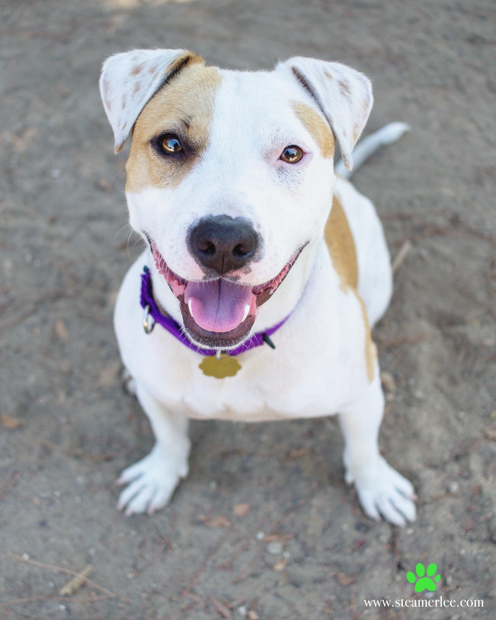 489-Orange-County-Dog-Photography-Steamer-Lee-Southern-California-SBACC.JPG