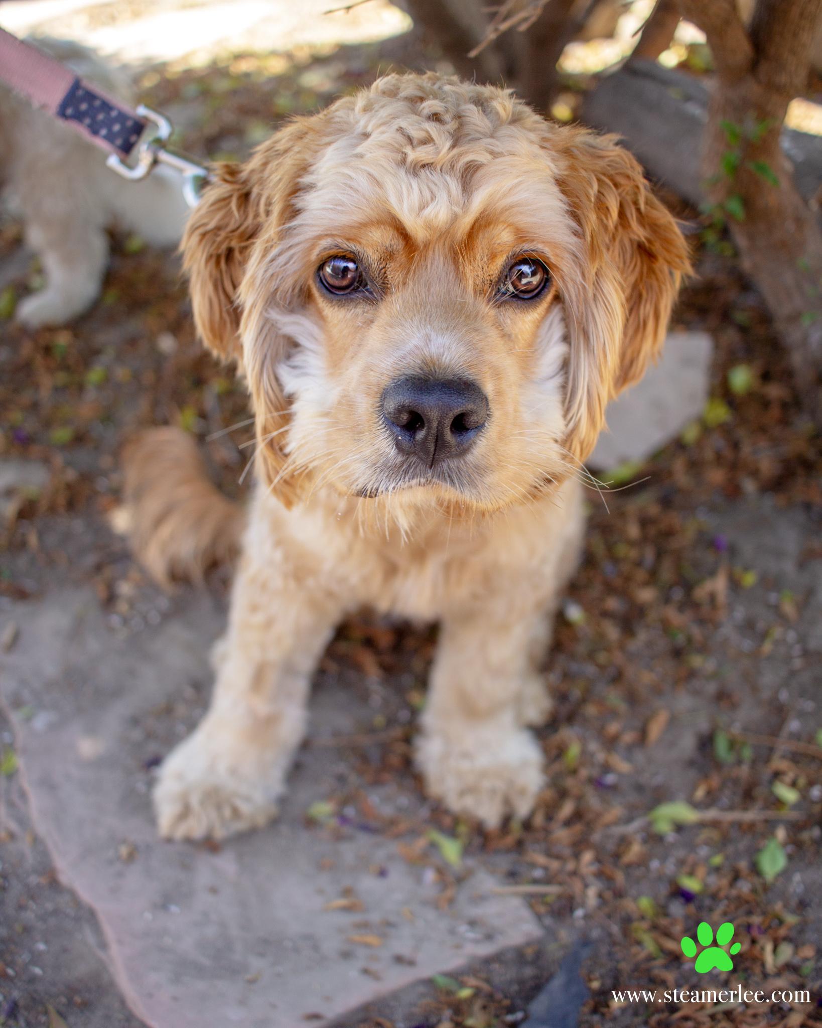 503-Orange-County-Dog-Photography-Steamer-Lee-Southern-California-SBACC.JPG