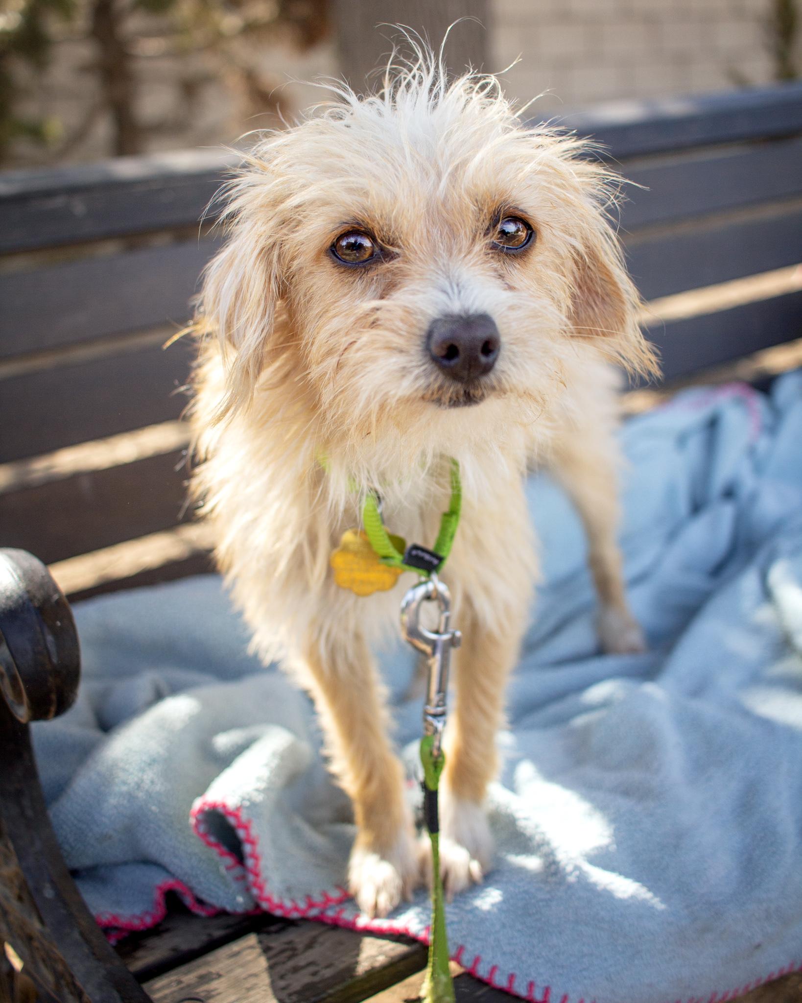 508-Orange-County-Dog-Photography-Steamer-Lee-Southern-California-SBACC.JPG
