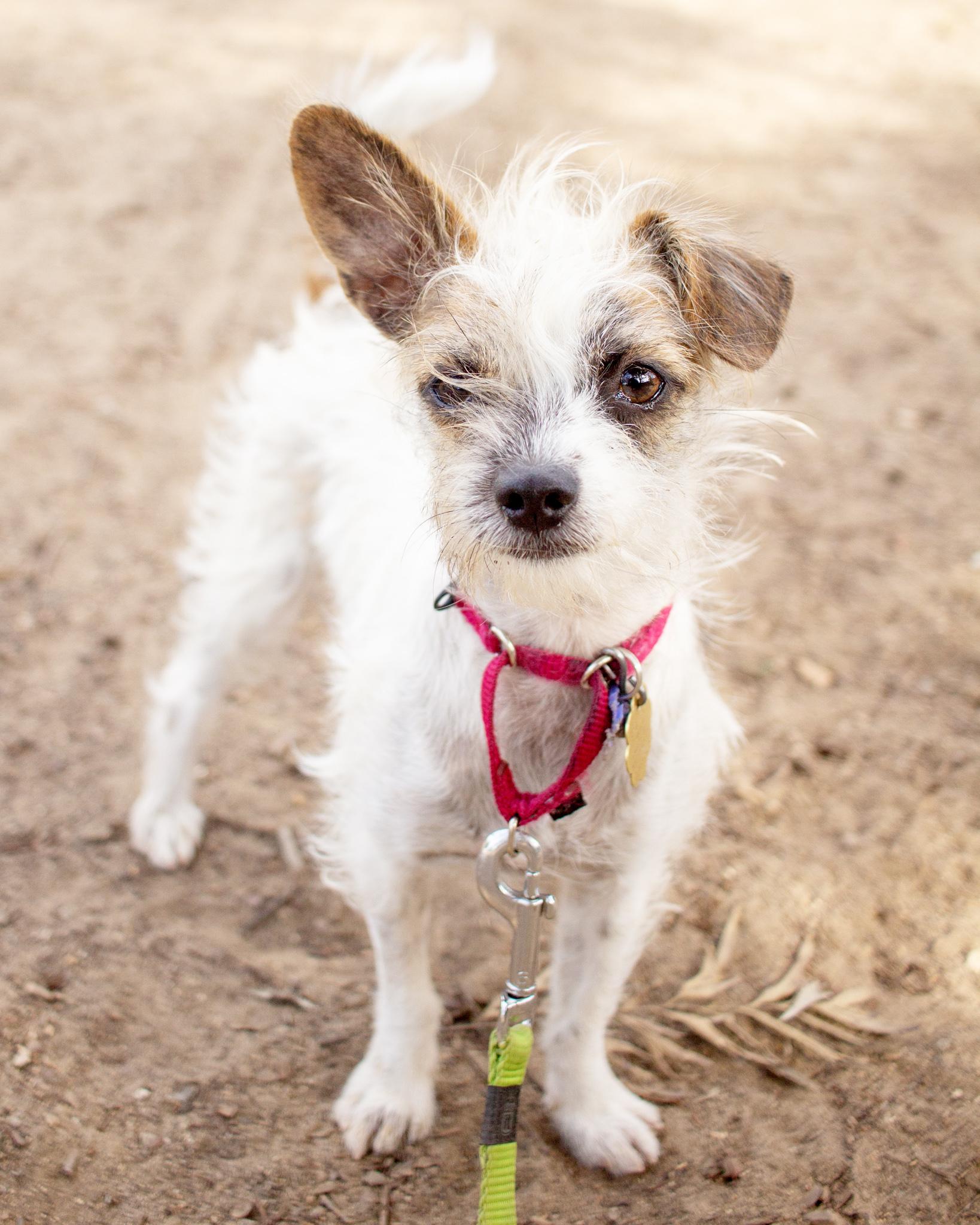 510-Orange-County-Dog-Photography-Steamer-Lee-Southern-California-SBACC.JPG