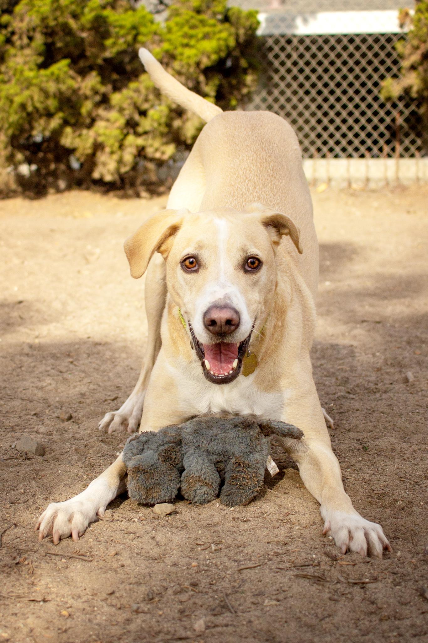 512-Orange-County-Dog-Photography-Steamer-Lee-Southern-California-SBACC.JPG
