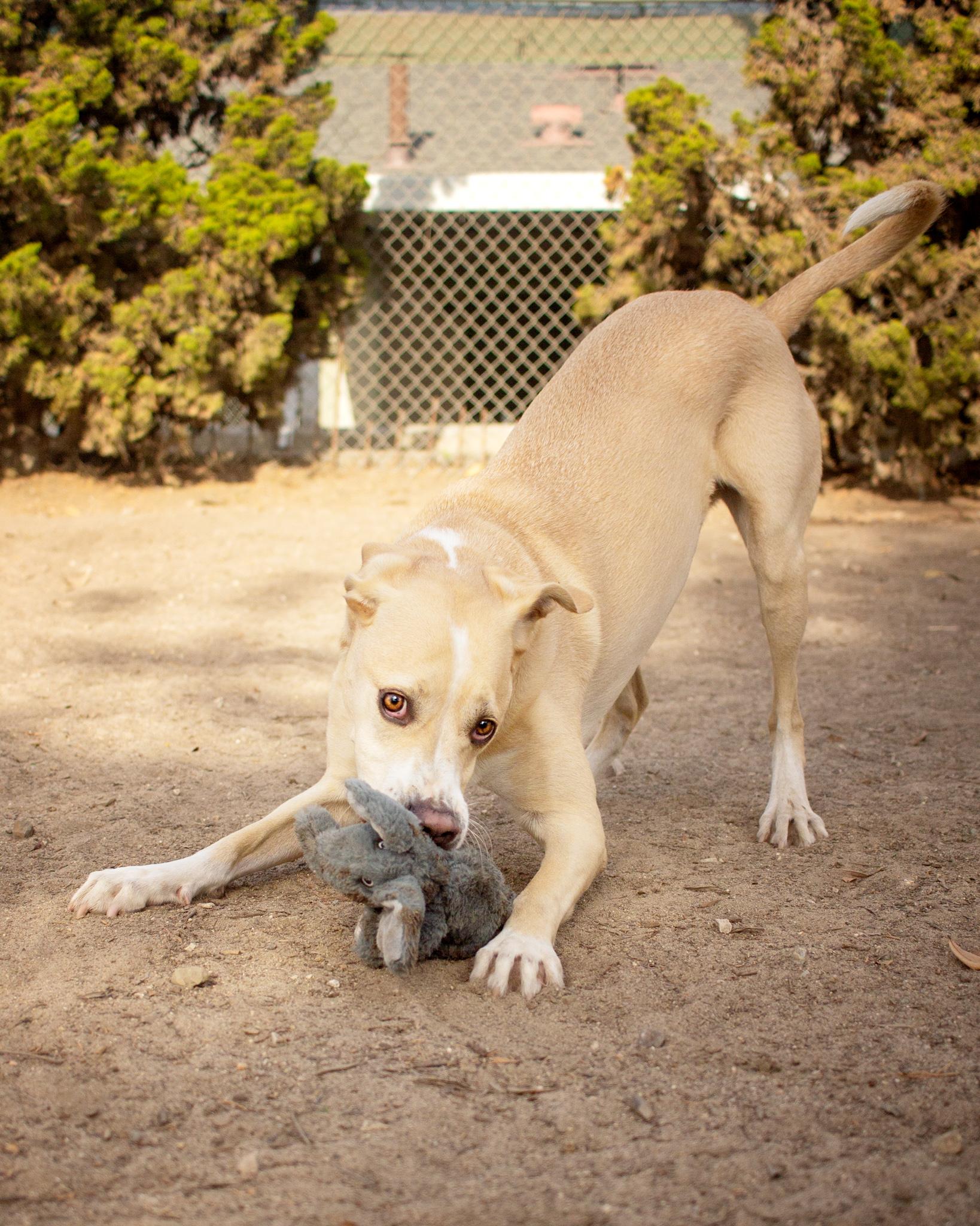 513-Orange-County-Dog-Photography-Steamer-Lee-Southern-California-SBACC.JPG