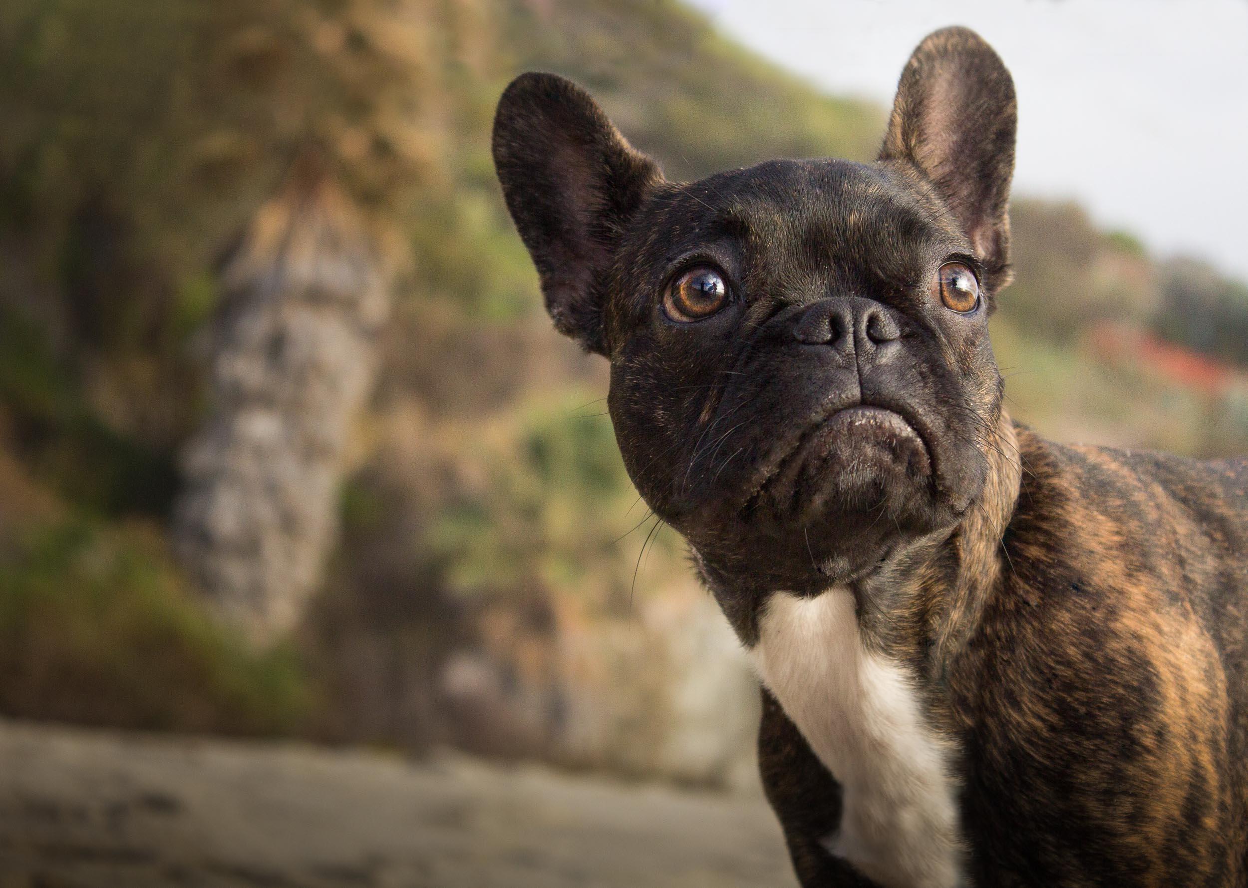 02-Orange-County-Dog-Photographer-Southern-California-Steamer-Lee.JPG