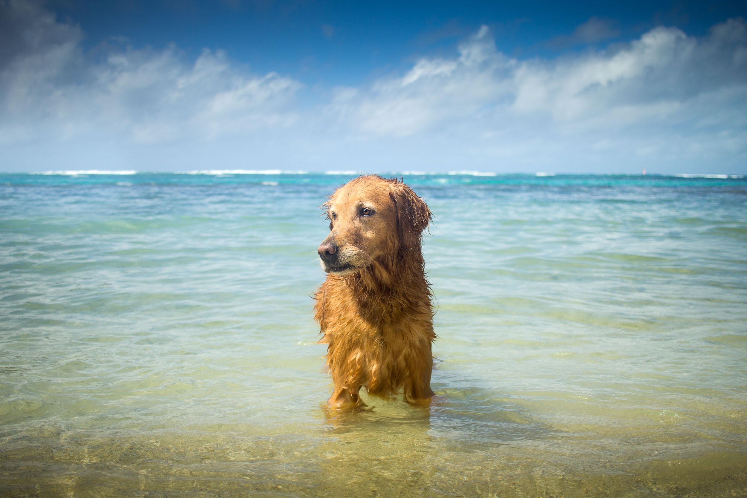 08-Orange-County-Dog-Photographer-Southern-California-Steamer-Lee.JPG
