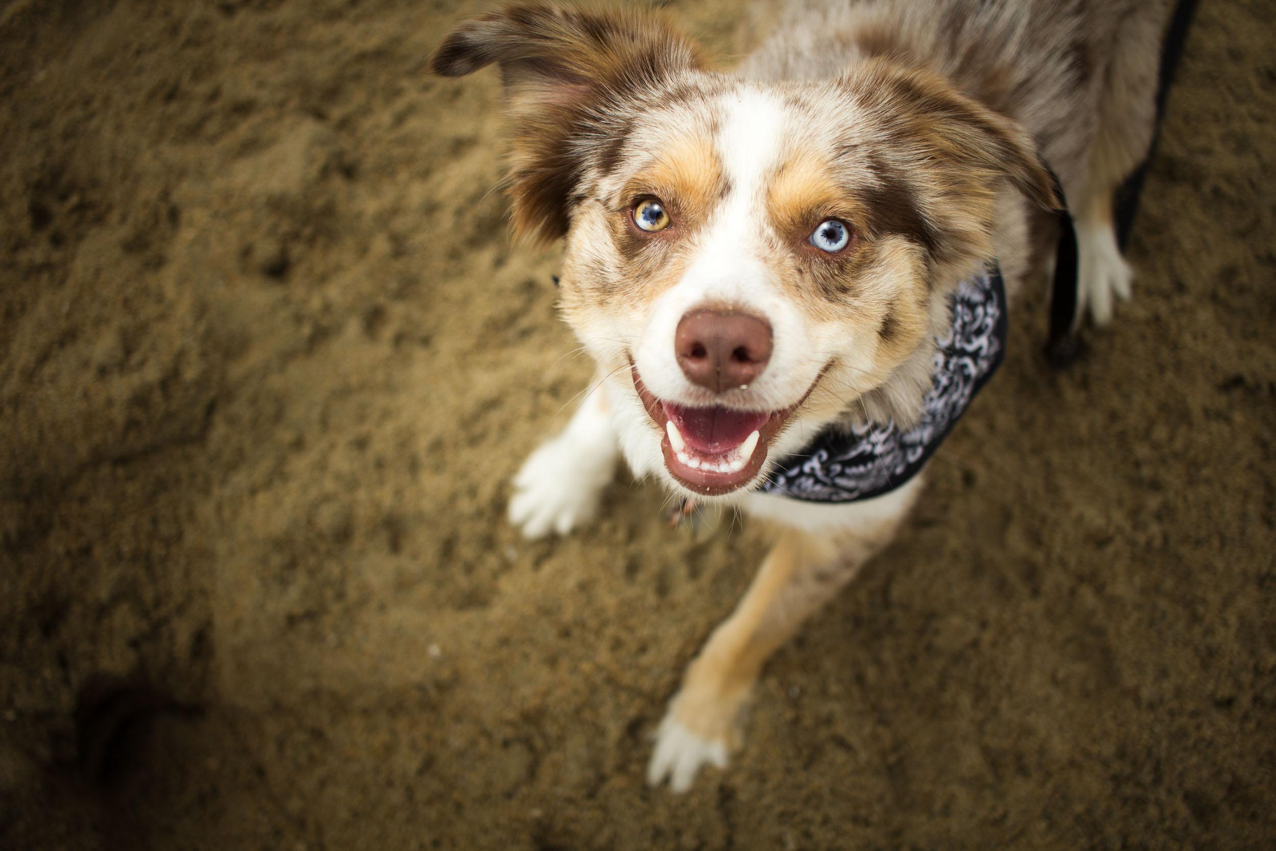09-Orange-County-Dog-Photographer-Southern-California-Steamer-Lee.JPG