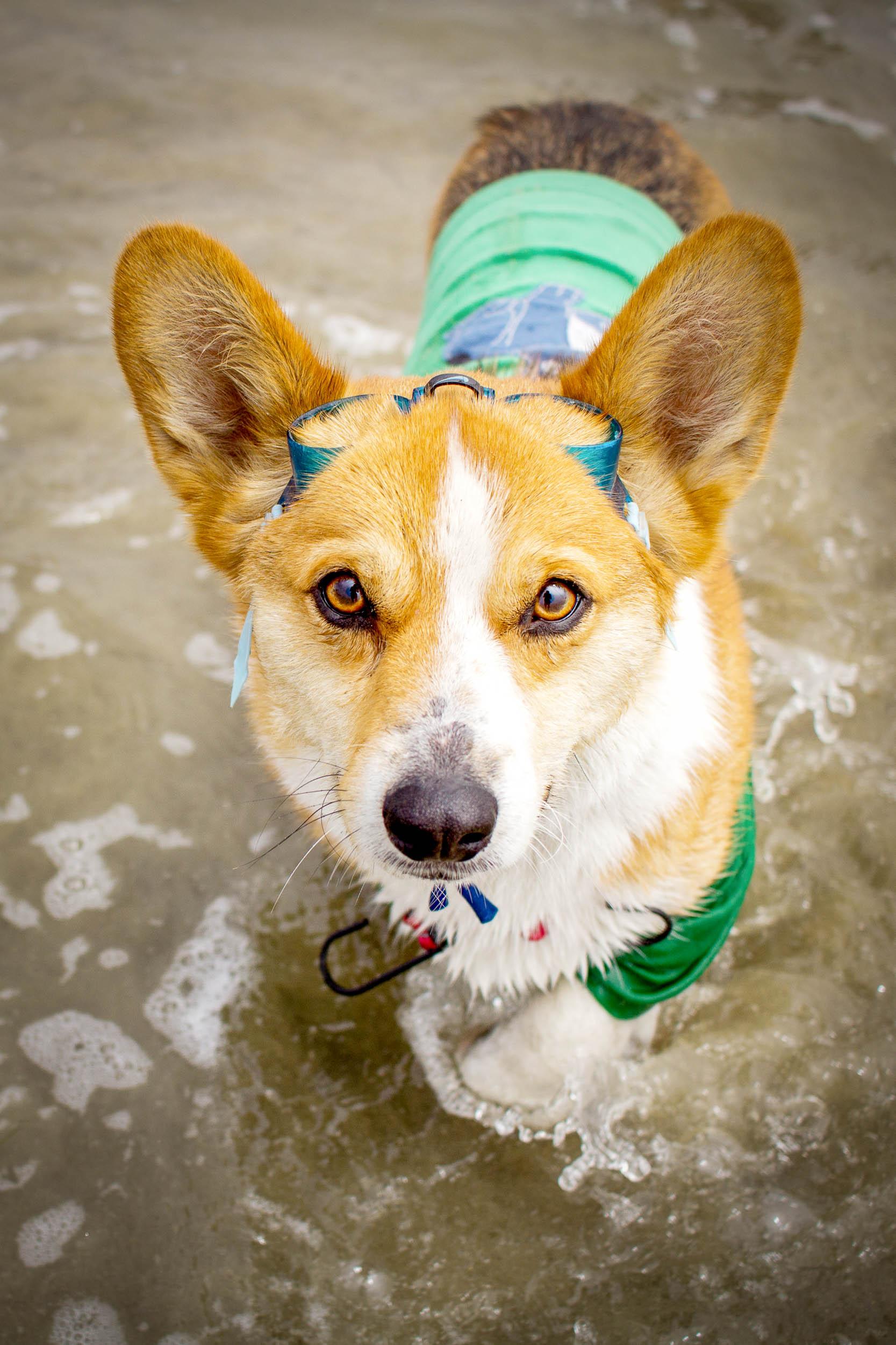 18-Orange-County-Dog-Photographer-Southern-California-Steamer-Lee.JPG
