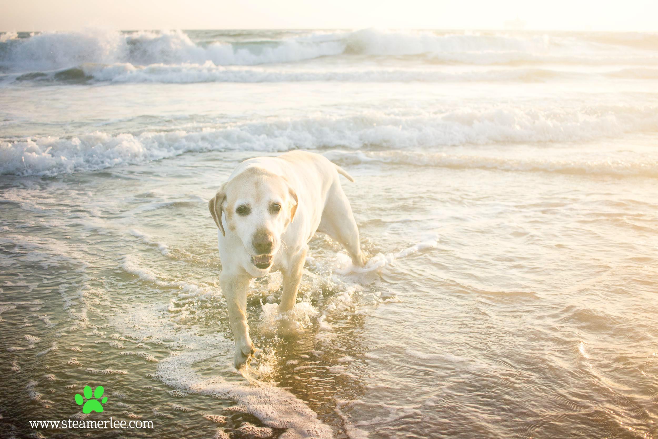 16-Orange-County-Dog-Photographer-Southern-California-Steamer-Lee.JPG